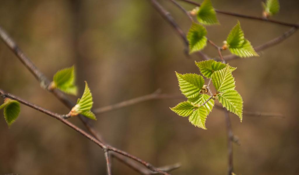 природа листья весна  № 3899972 загрузить