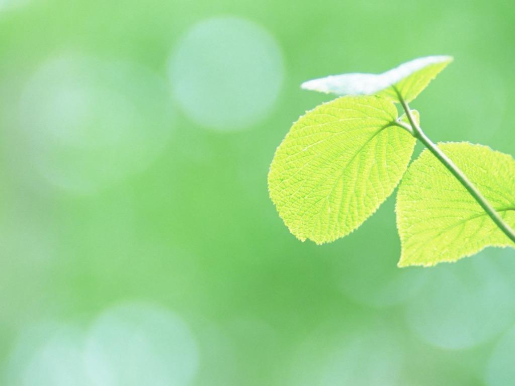 листья зелень фокус  № 1341579 бесплатно