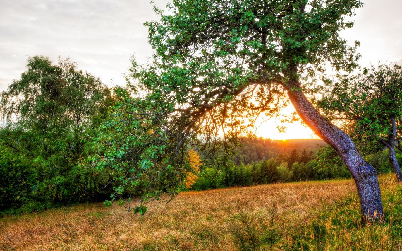 природа рассвет деревья  № 1158235  скачать
