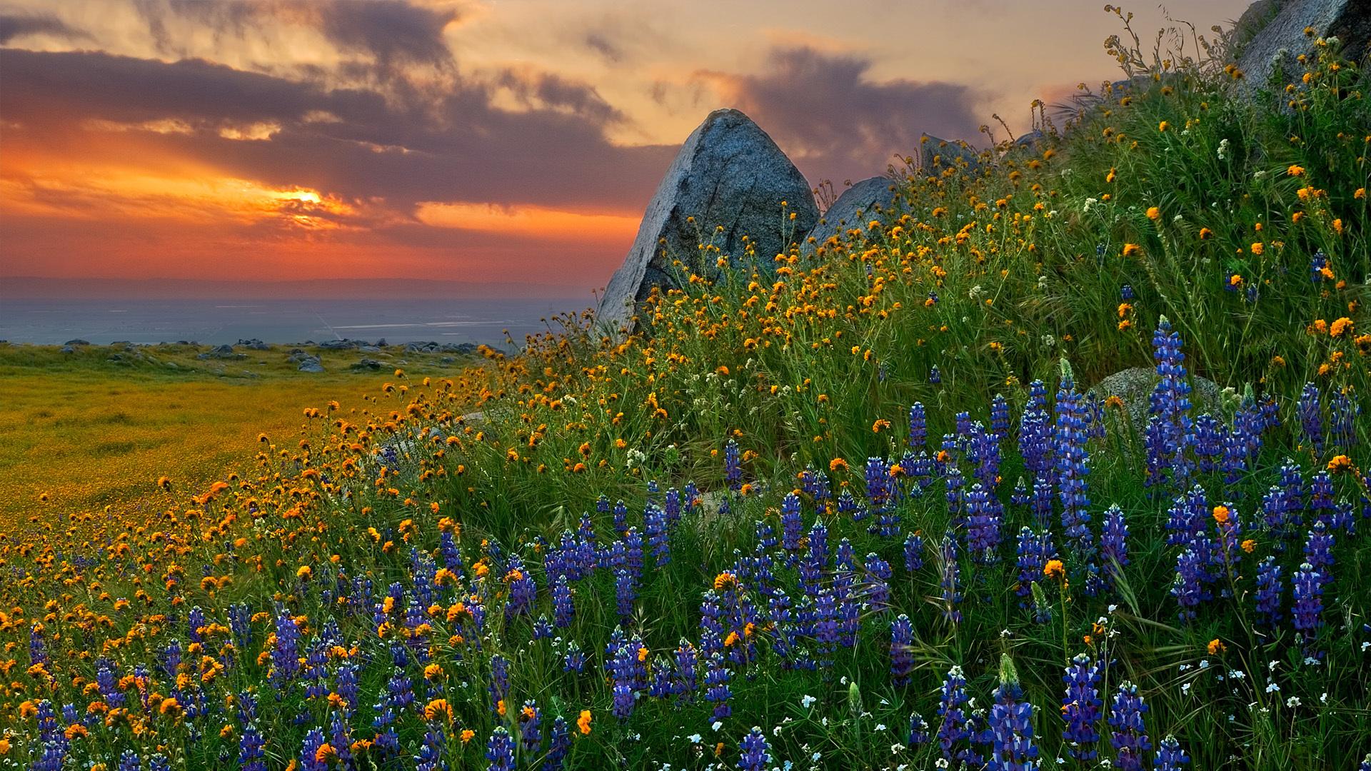 вертикальное фото цветы на фоне пейзажа полевые игра этой