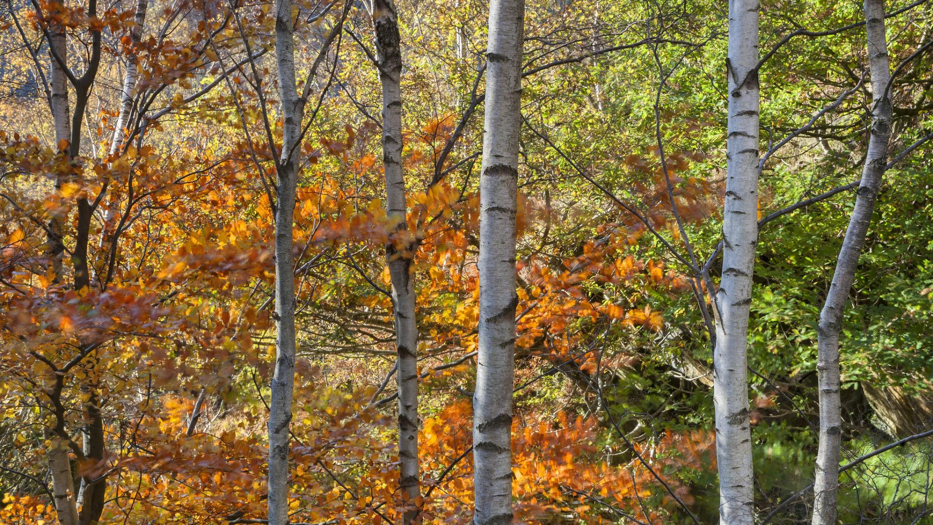 деревья парк осень роща  № 3186154 загрузить