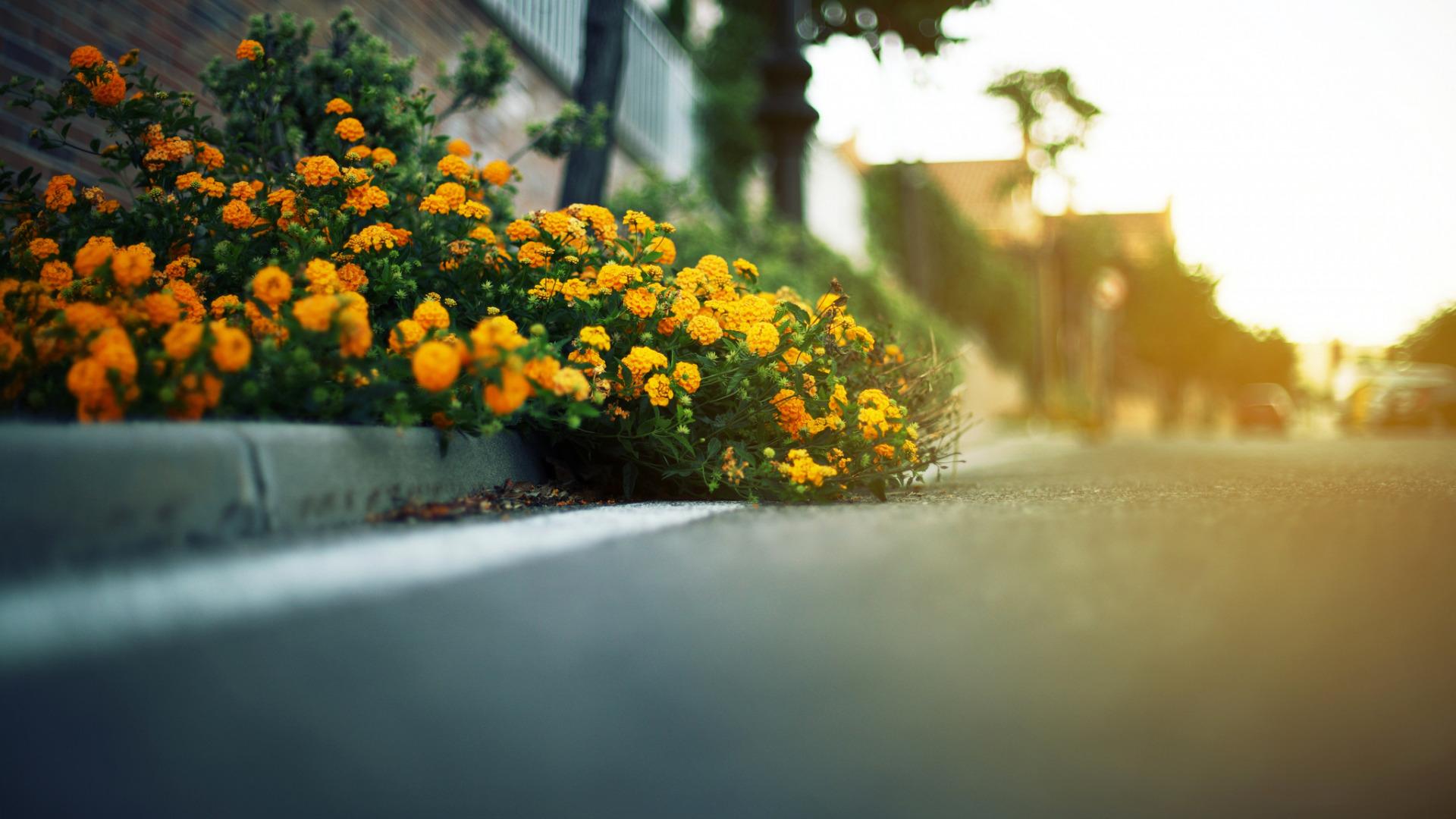 Желтые цветы у дорогои