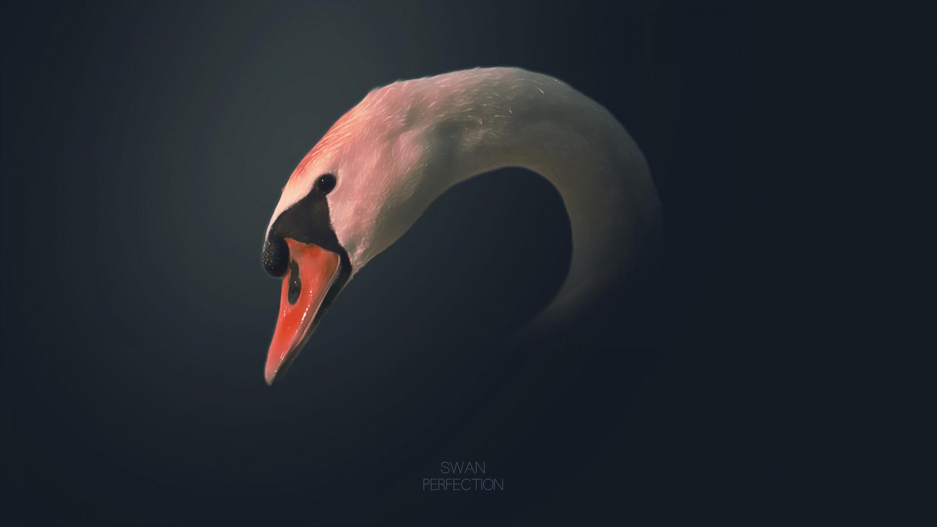 Черный стеклянный лебедь  № 3137127 загрузить