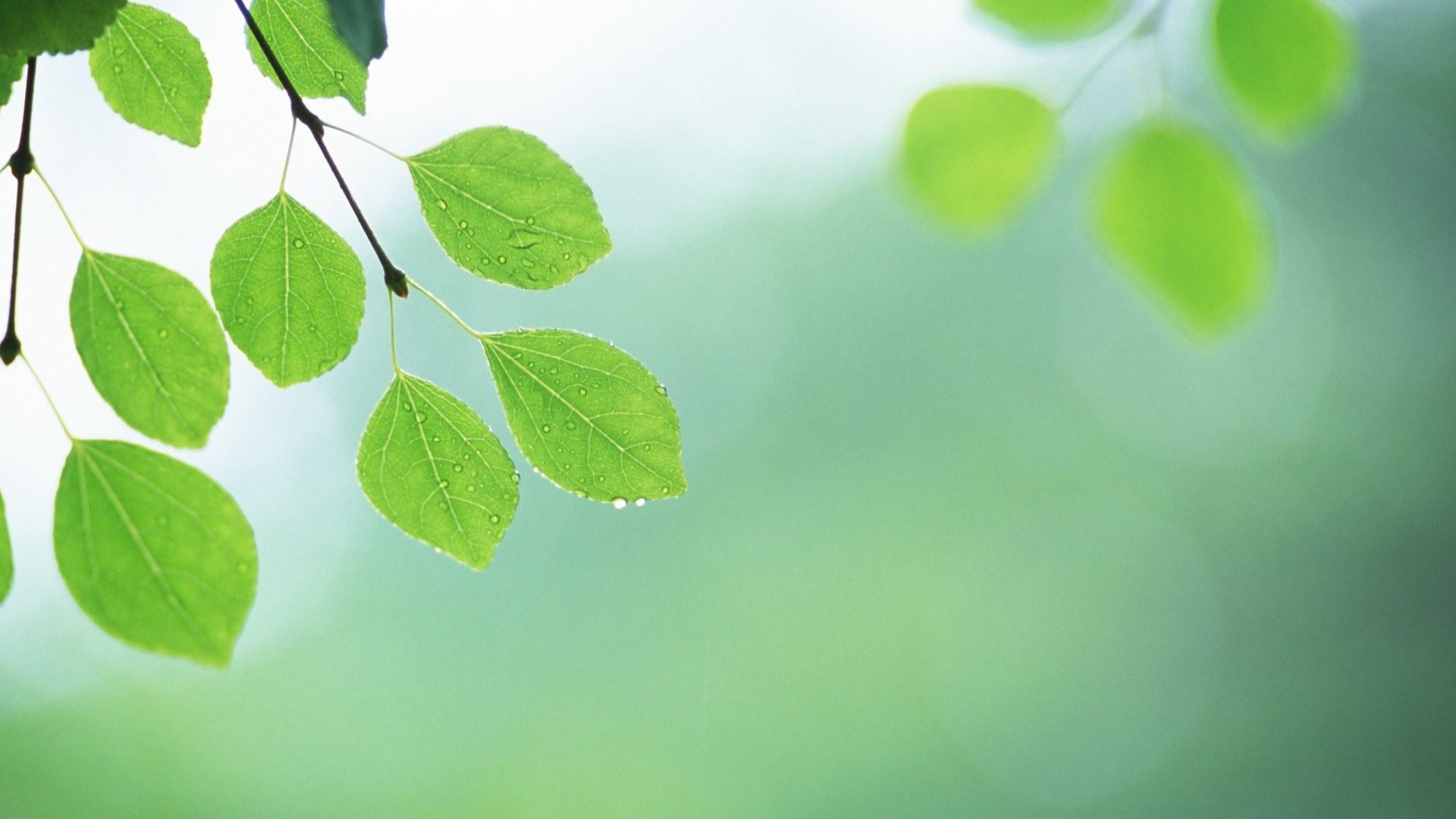 листья зелень фокус  № 1341619 загрузить