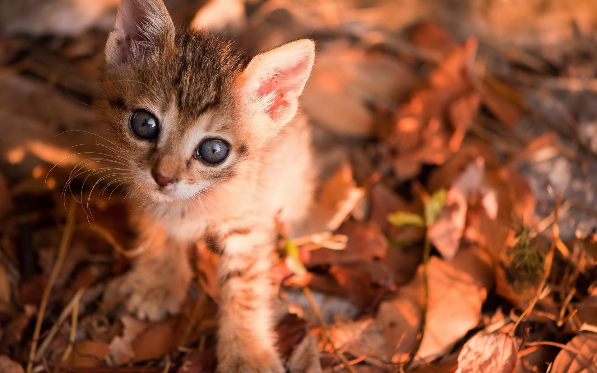 кошка осень листва  № 3898567 загрузить