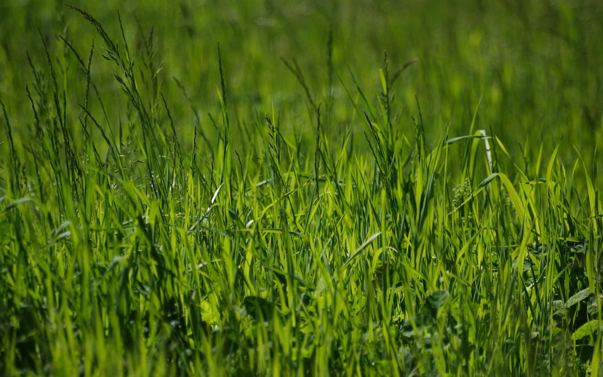 Зеленая, летняя трава  № 1074292  скачать