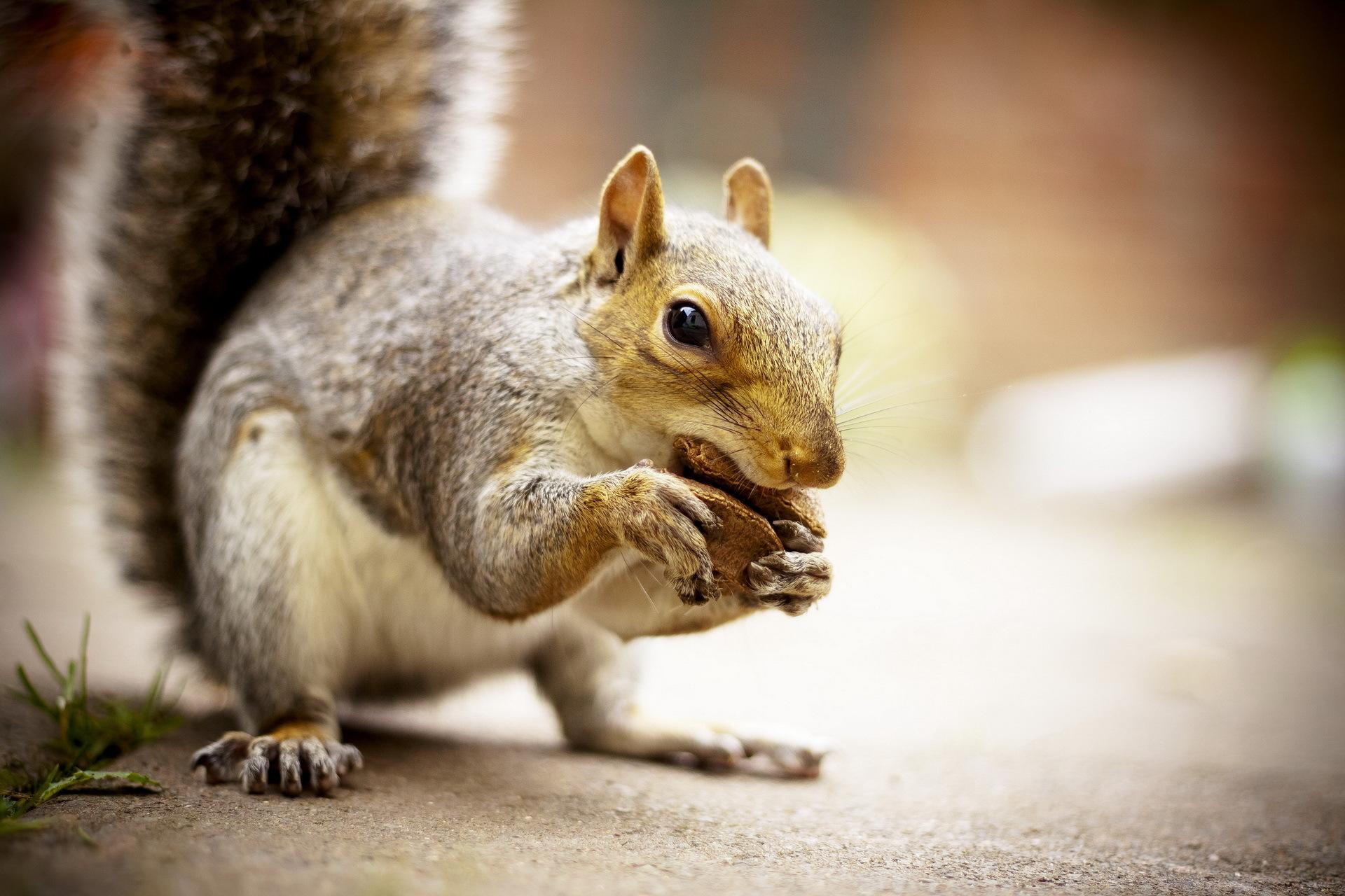 природа животные белка nature animals protein  № 1115652 бесплатно