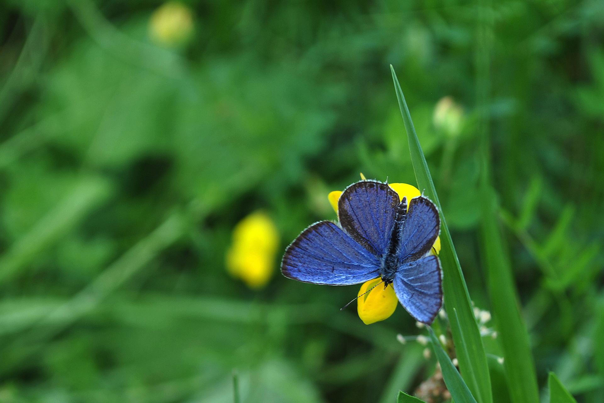 бабочка на зеленой траве  № 1396190  скачать