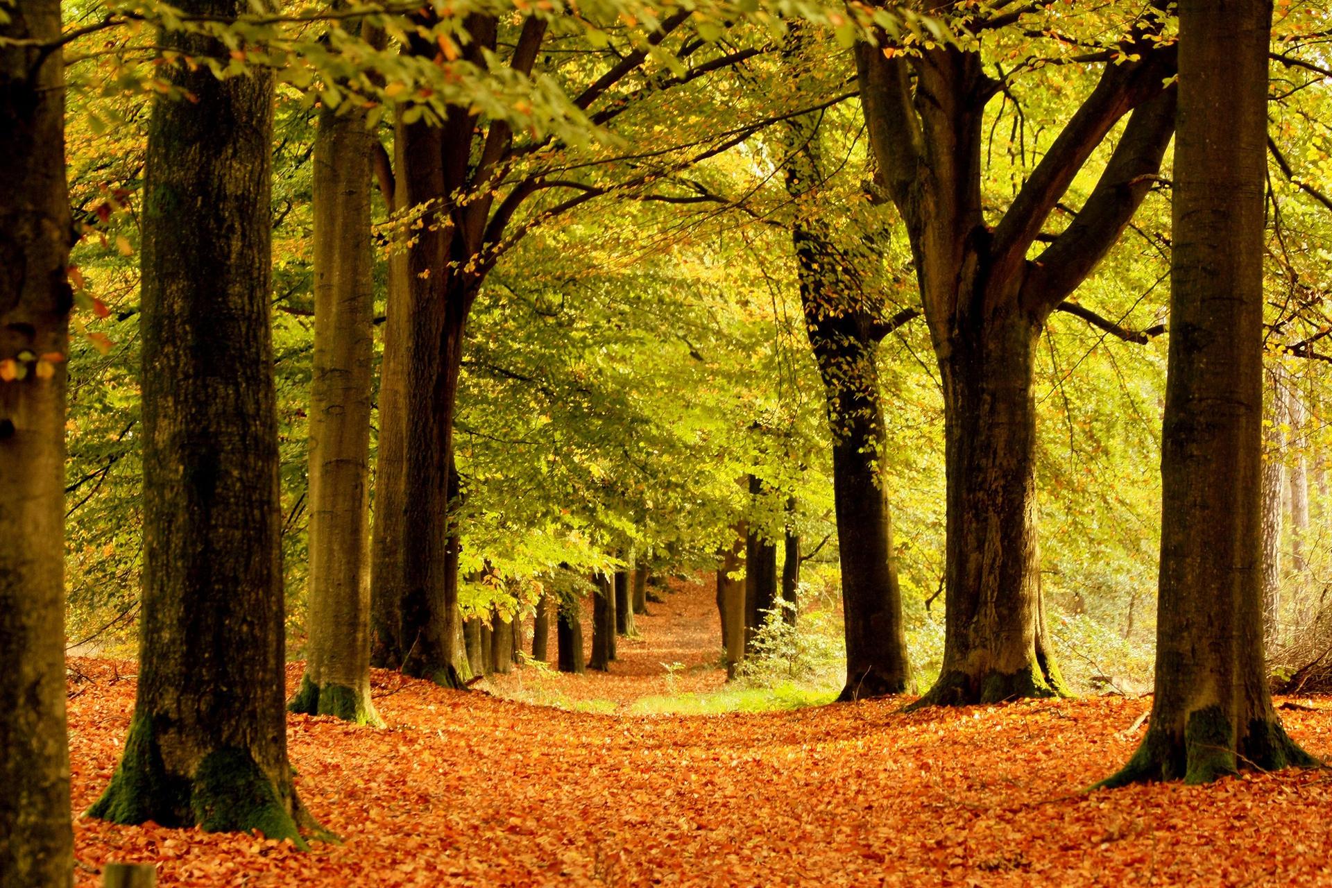 деревья парк осень роща  № 3186094 загрузить