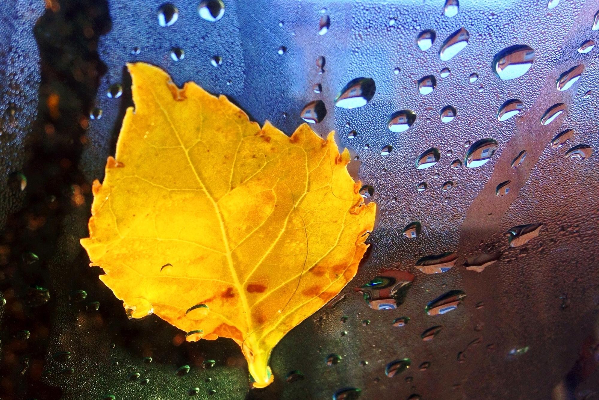 листок капля желтый на воде  № 2777430  скачать