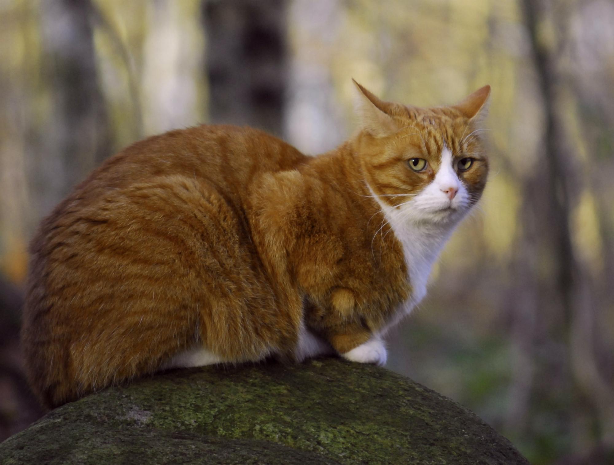 Кот на камушках  № 530536 бесплатно