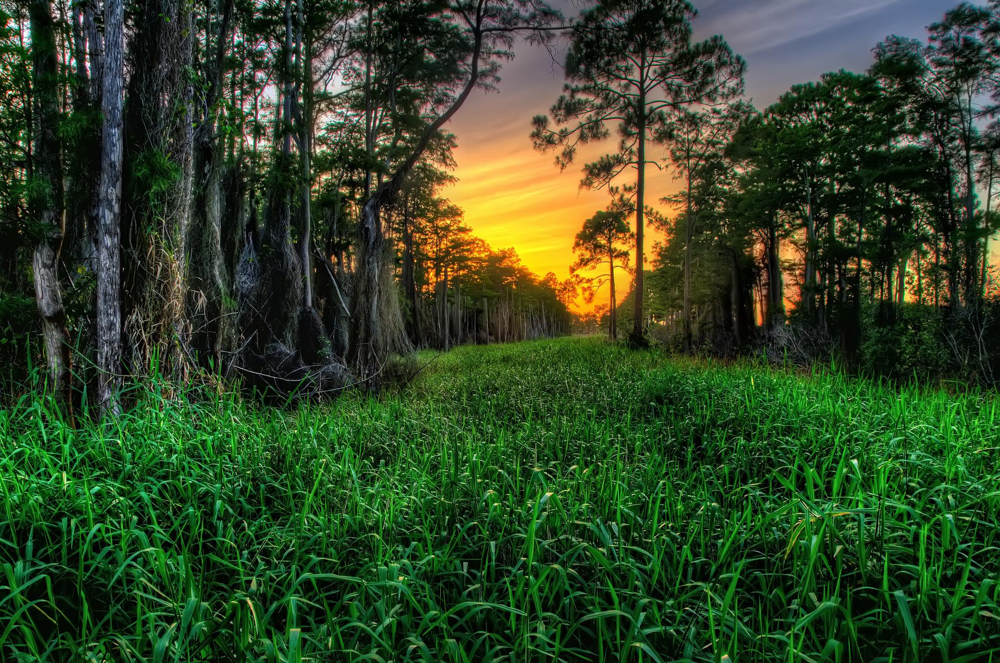 закат,деревья,зелень  № 1076598 без смс
