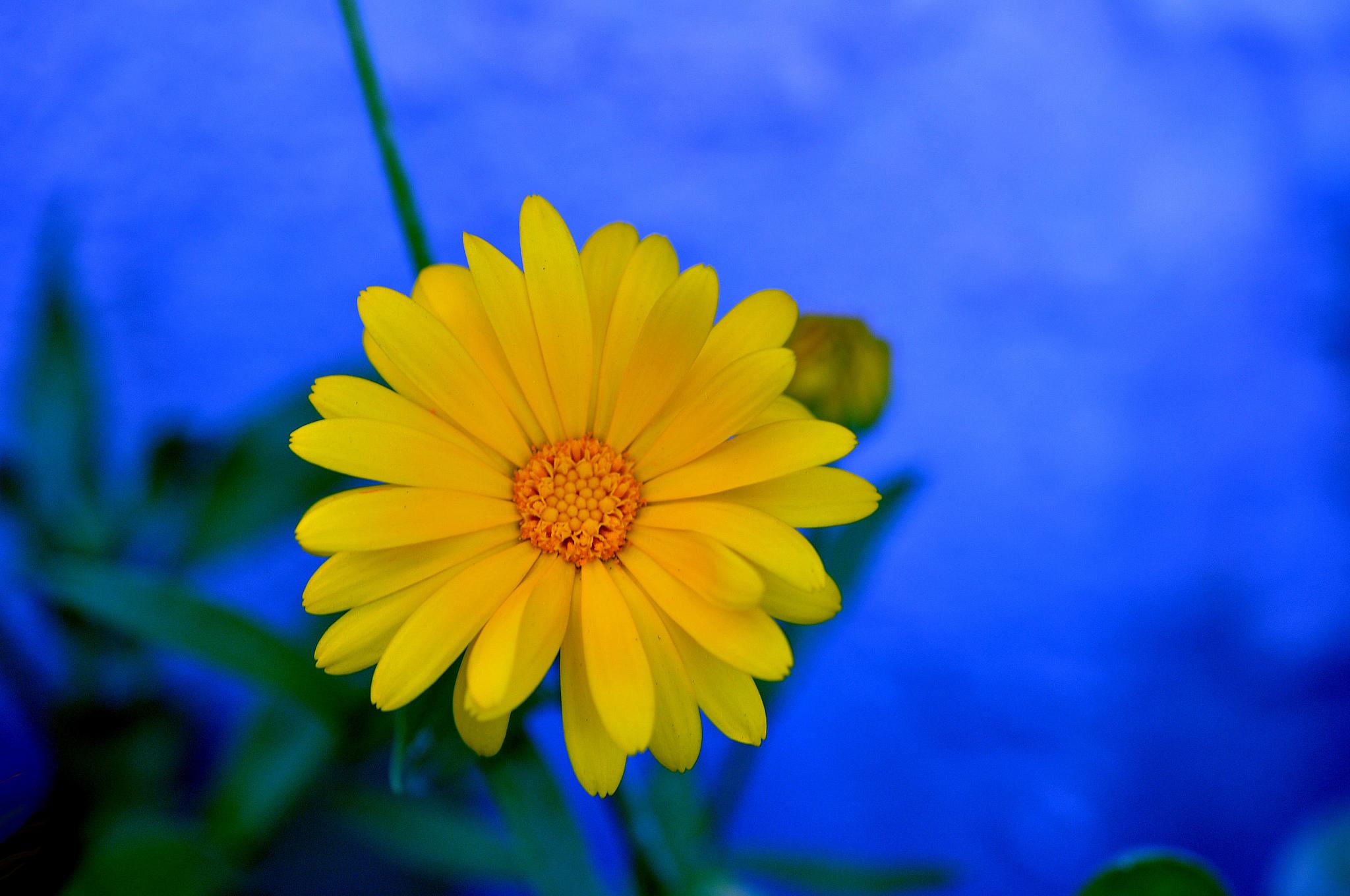 Желтый цветок  № 670991 бесплатно