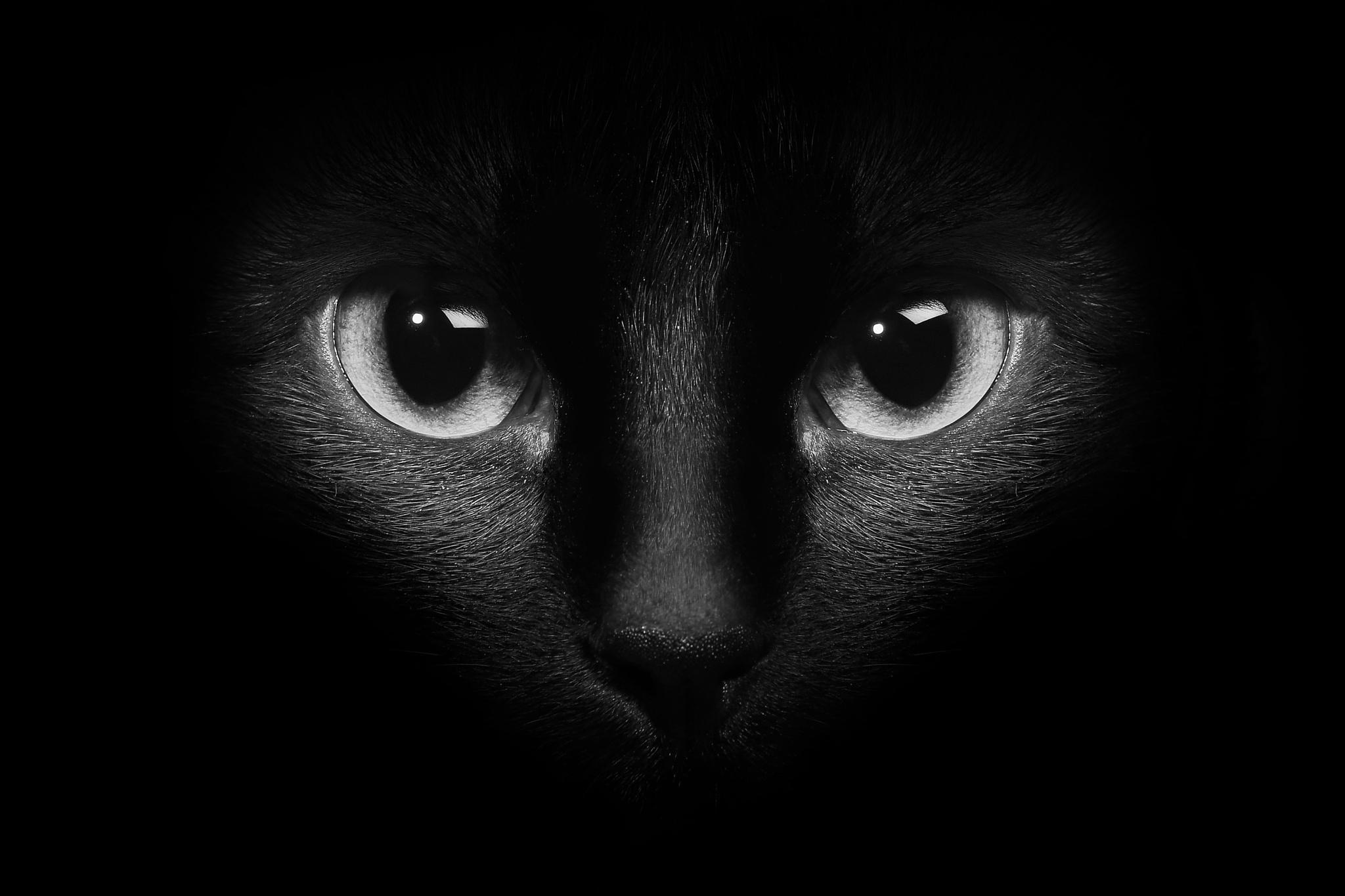 обои на рабочий стол глаза кошки на темном фоне № 237937  скачать
