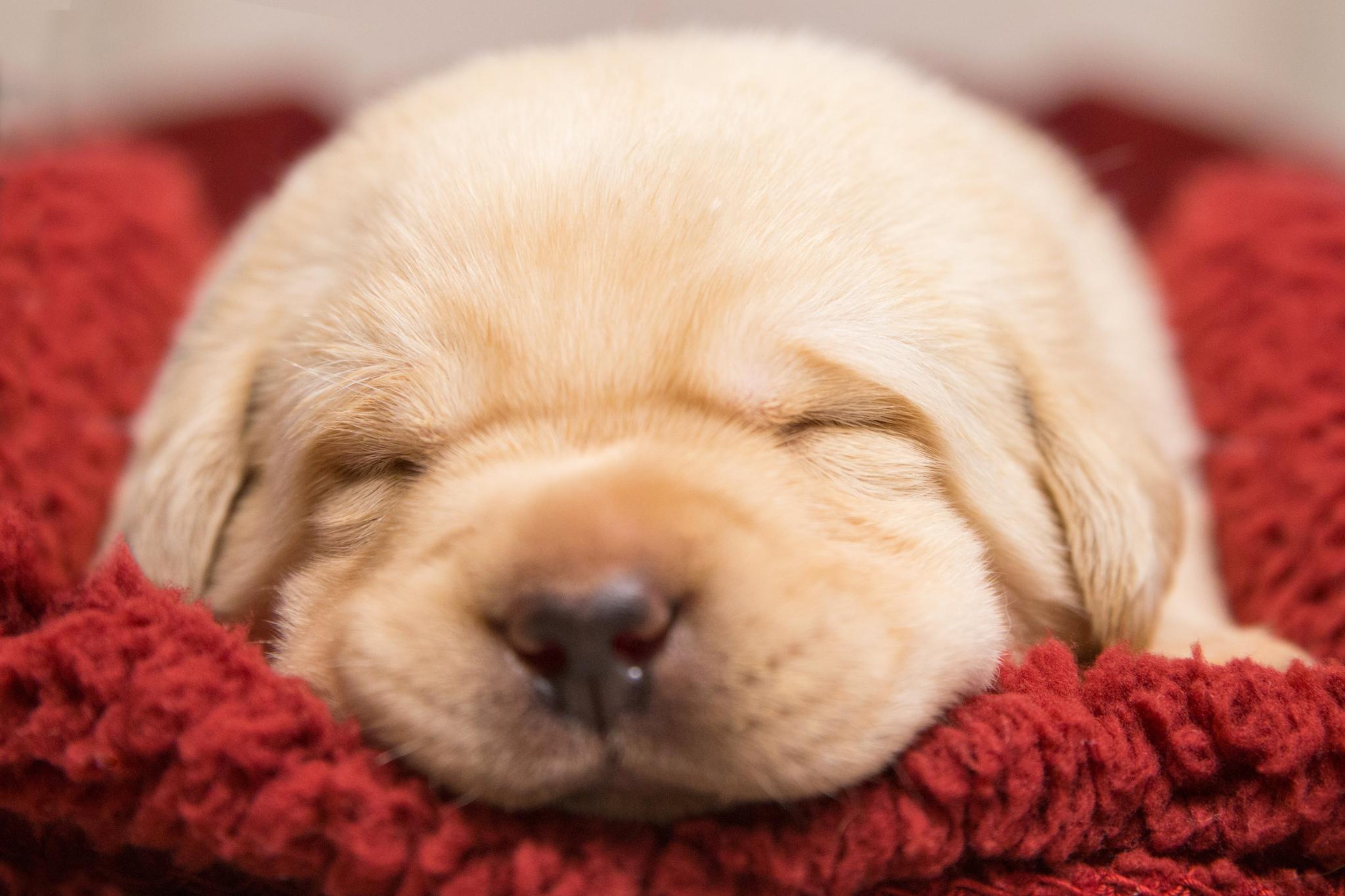 милые собаки  № 688071 бесплатно
