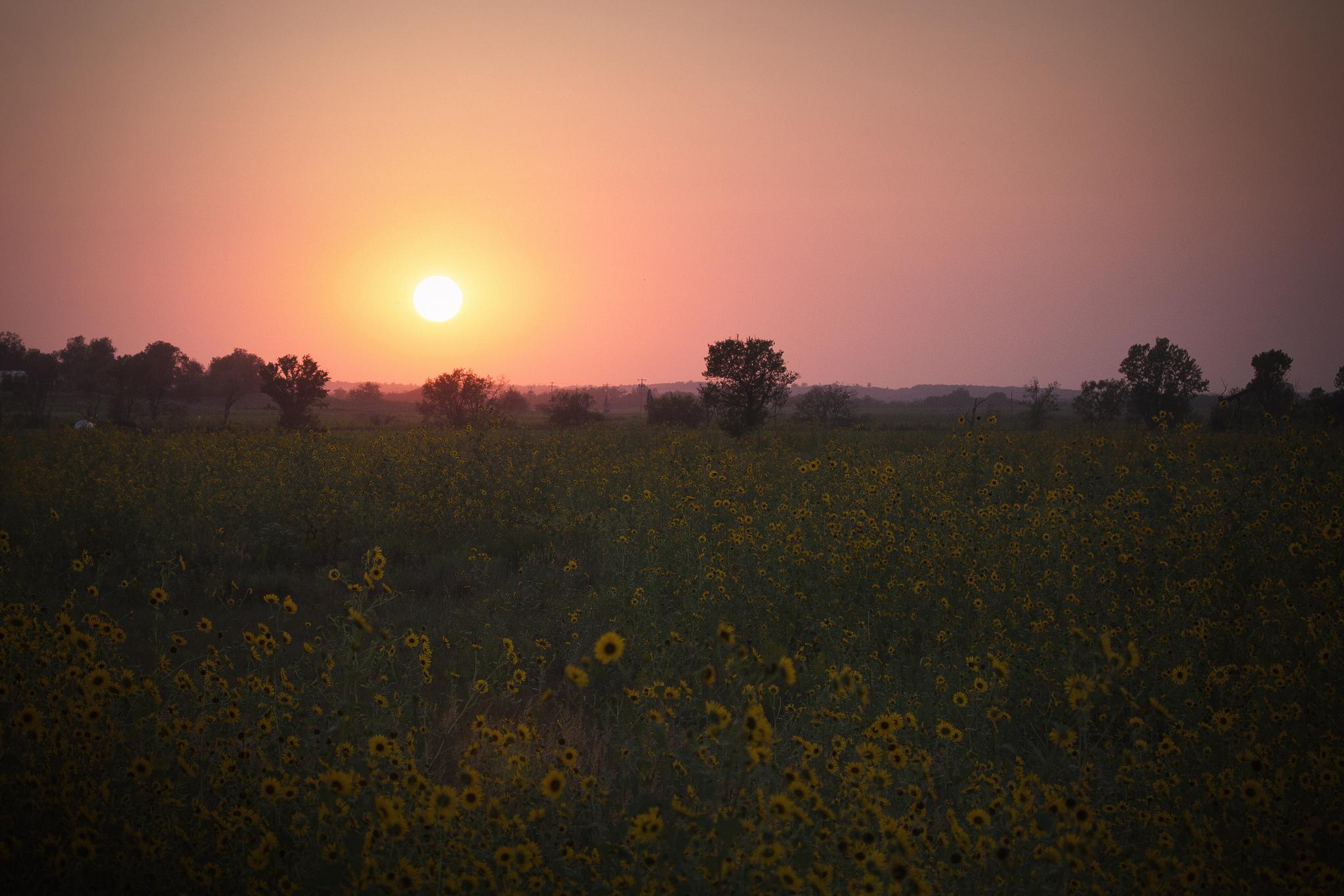 поле желтое закат  № 680870 бесплатно
