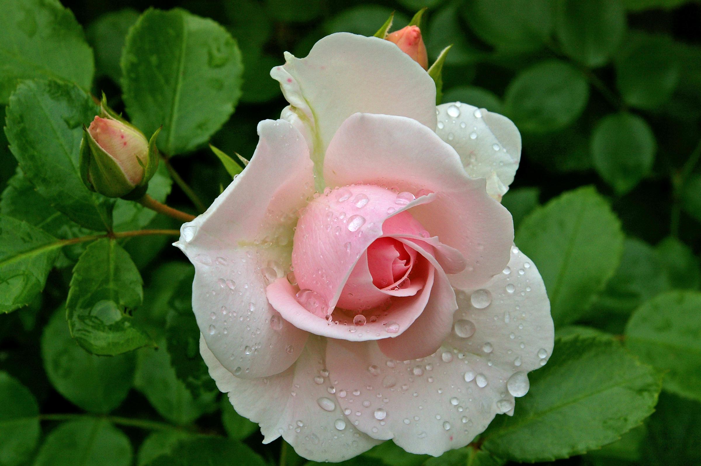 цветы крупным планом в хорошем разрешении фото лишения звания