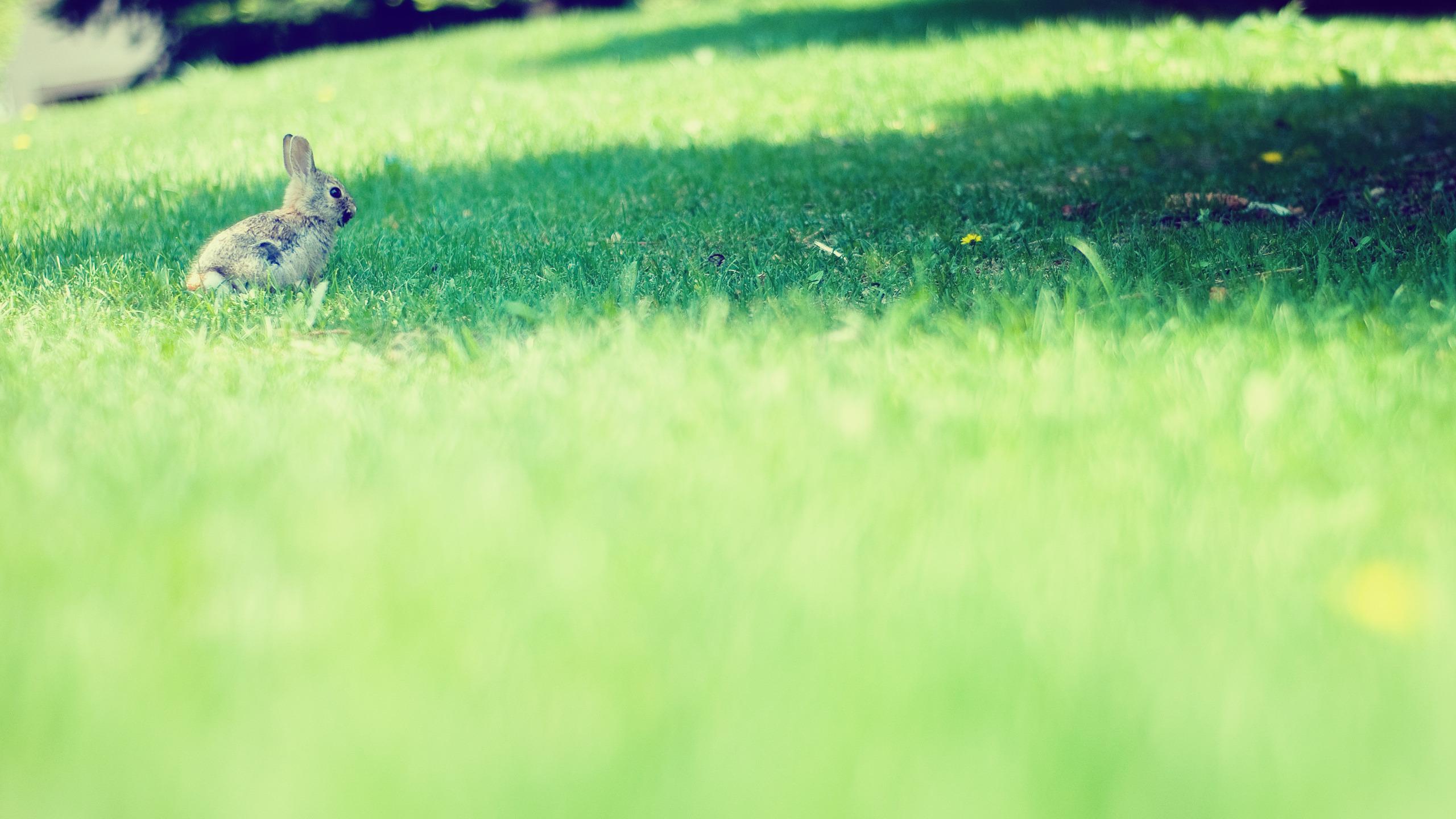 кролик трава  № 1963969 бесплатно