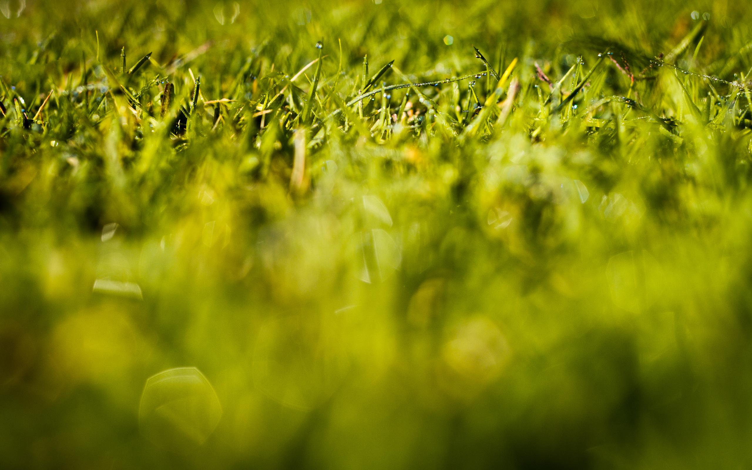 Трава макро съемка  № 3148009 без смс