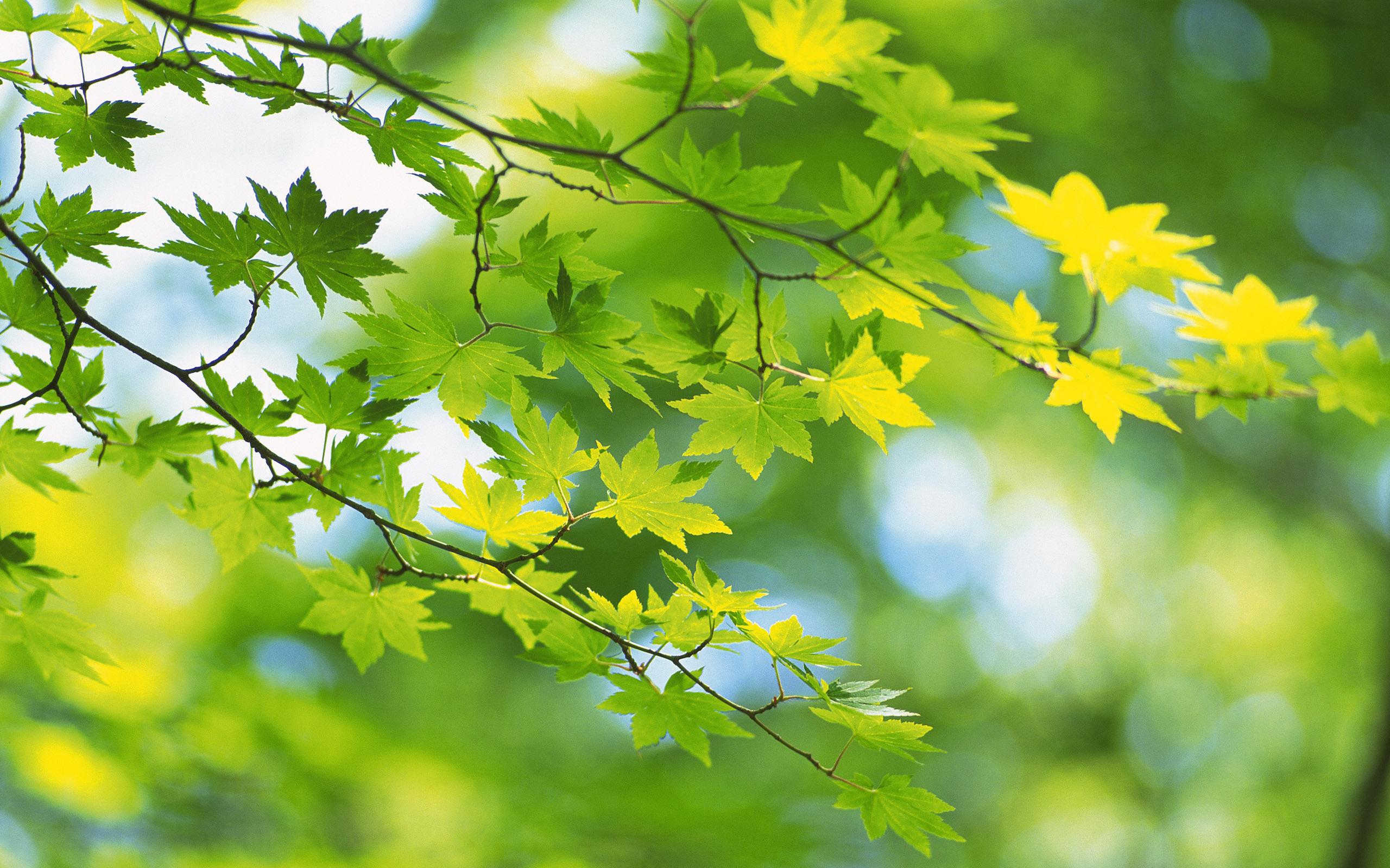 природа листья весна  № 3899984 загрузить