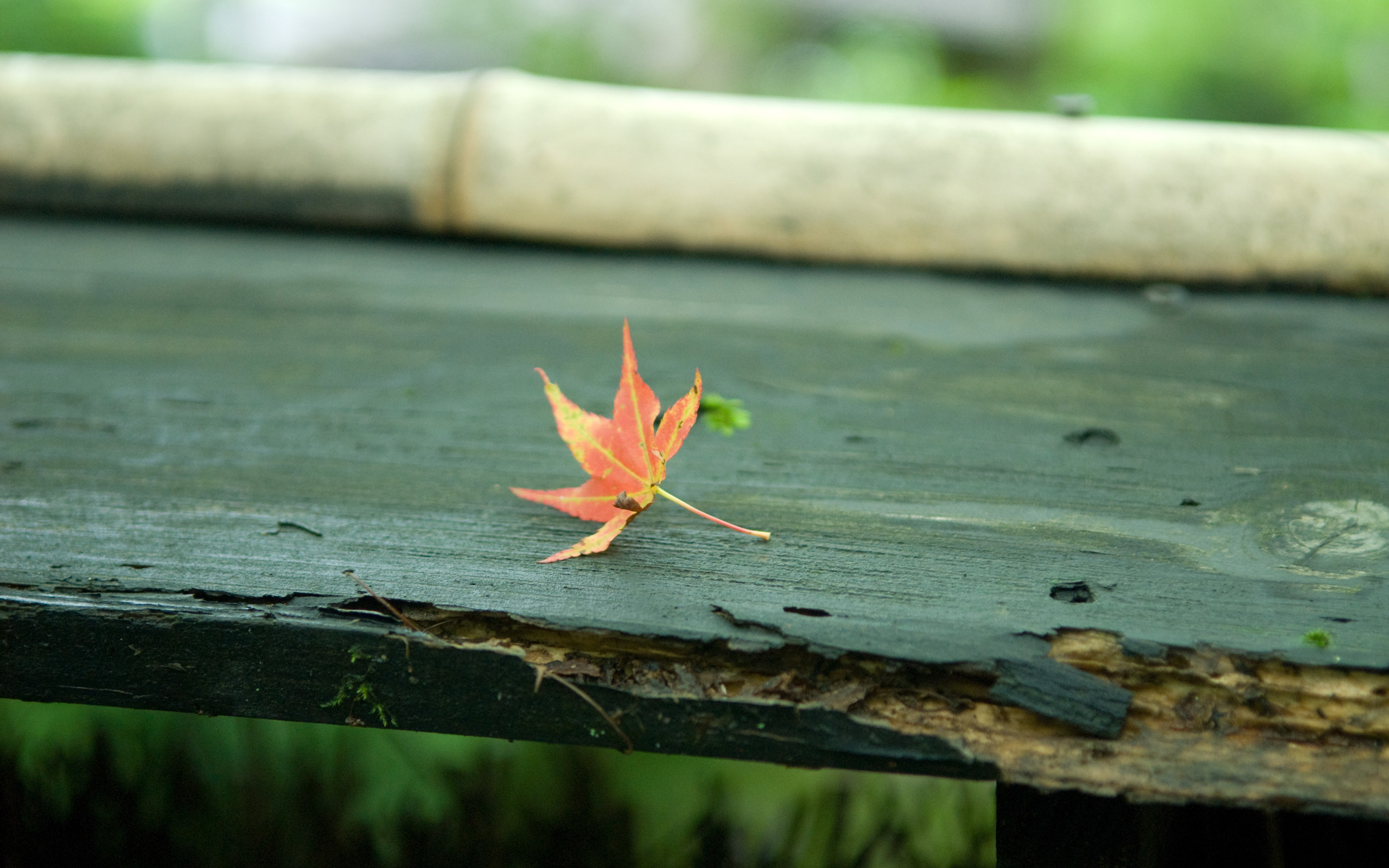 Осень листья лавка стол  № 3187436 без смс