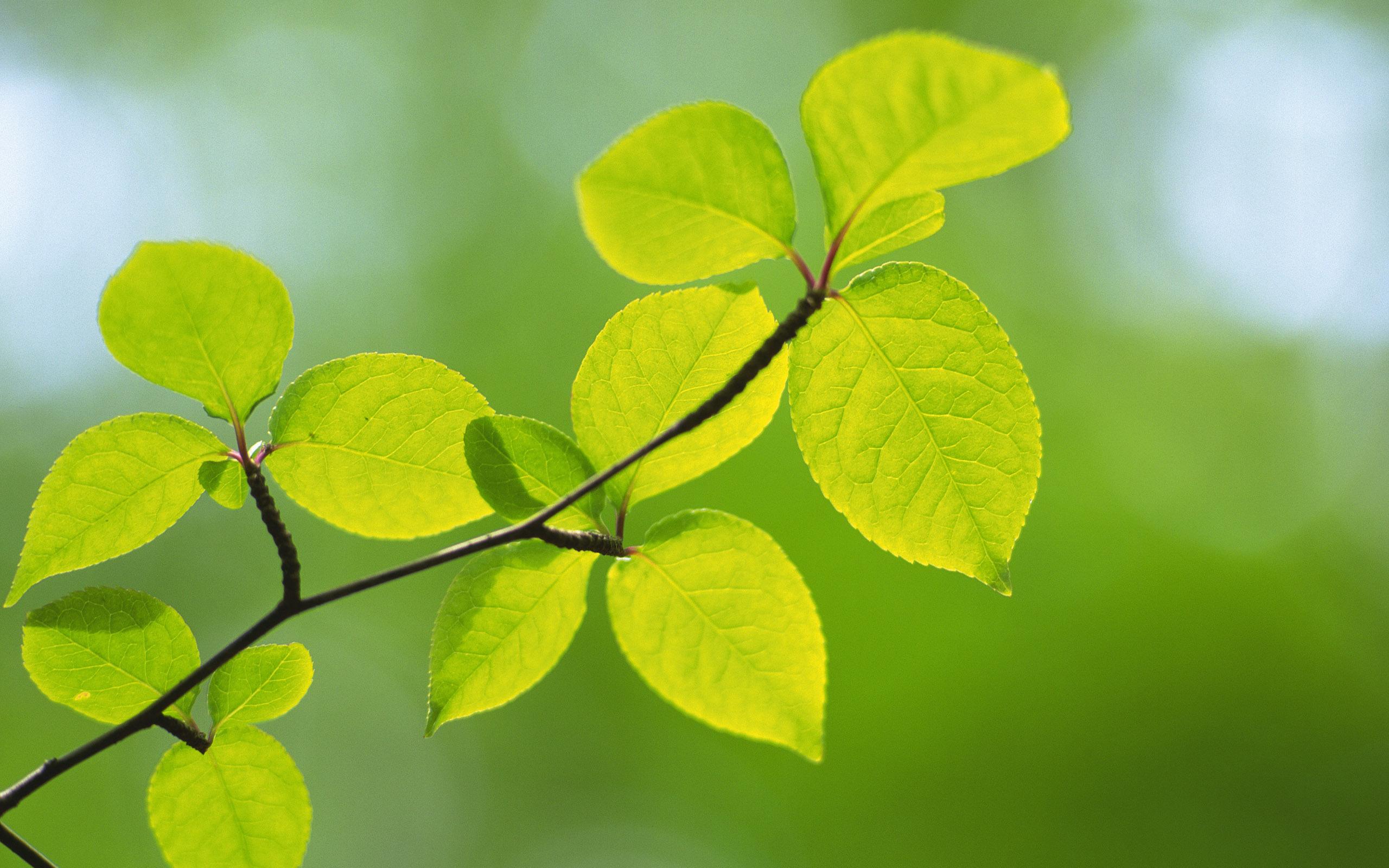 природа листья весна  № 3899964 бесплатно