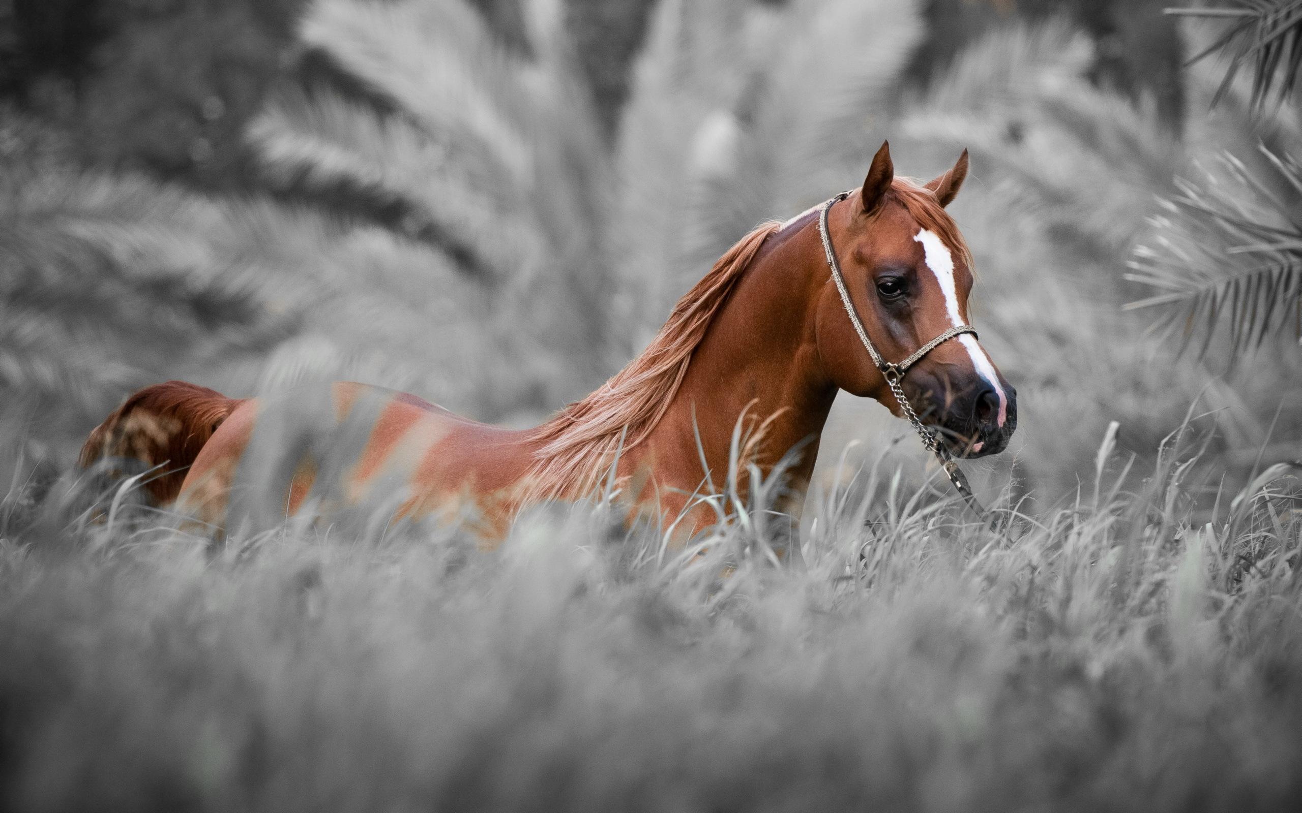 рисунок графика лошадь природа животные figure graphics horse nature animals  № 3925648 бесплатно