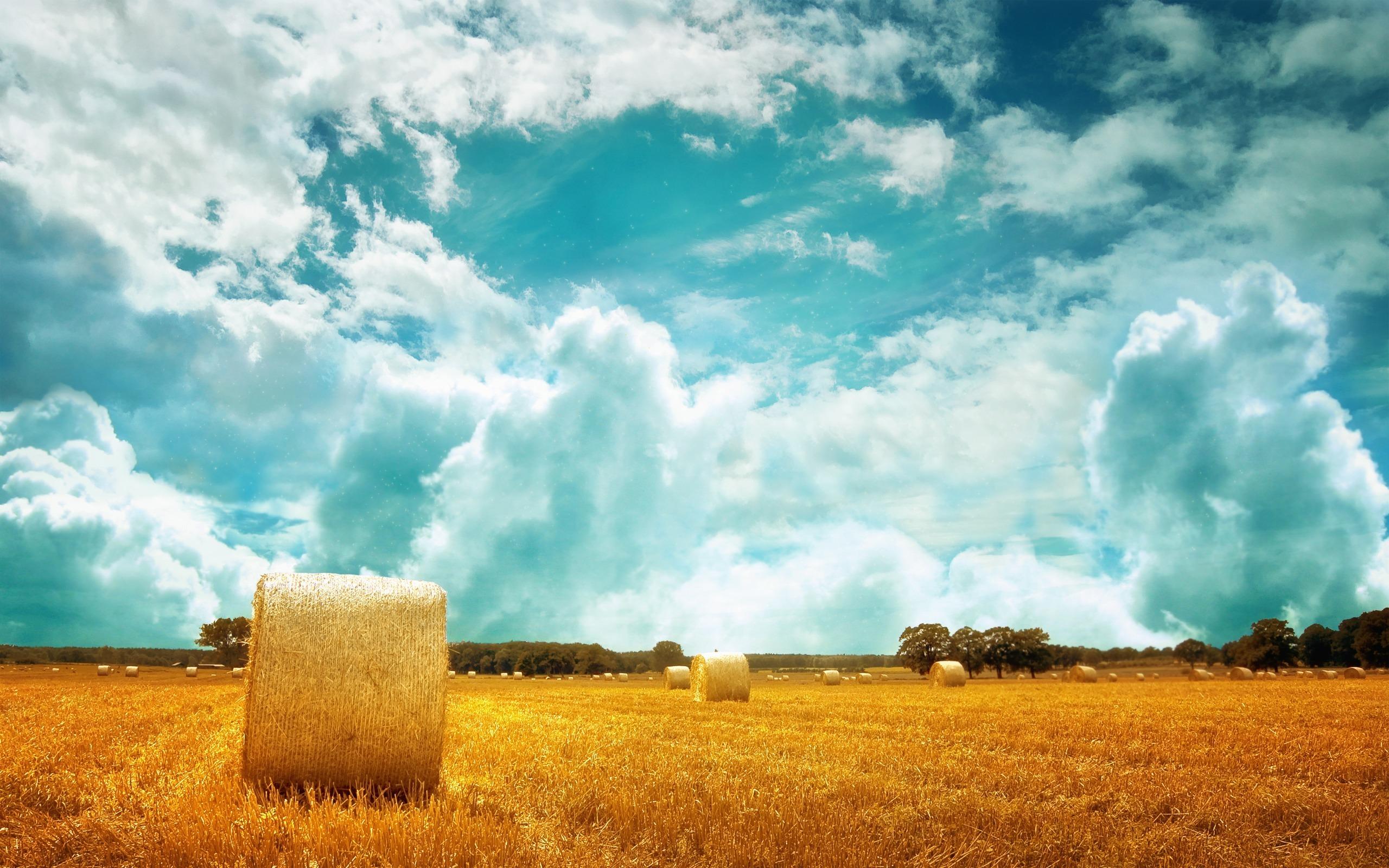 природа поле горизонт  № 3896451 бесплатно