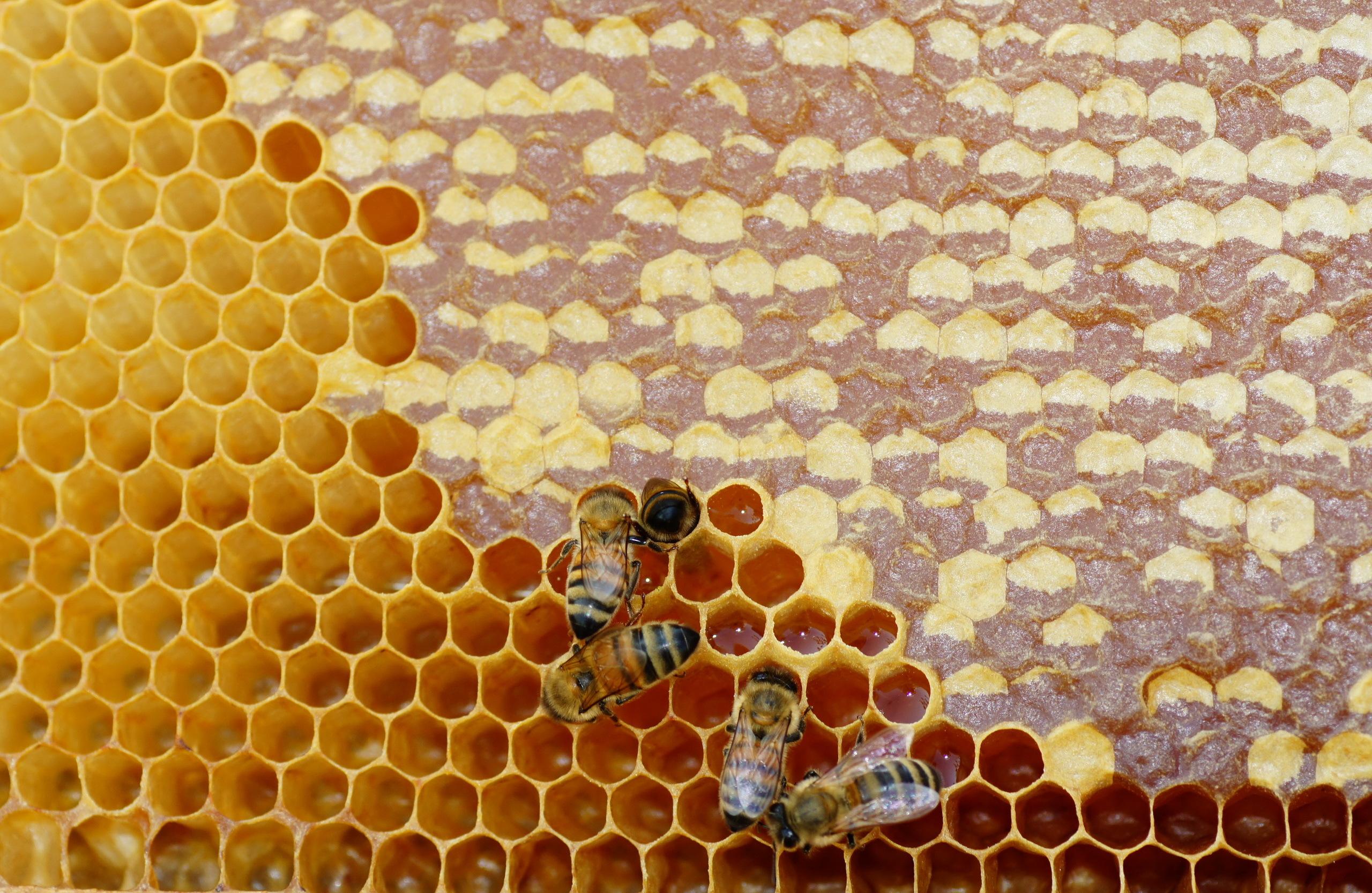 Мёд в сотах  № 604455 бесплатно