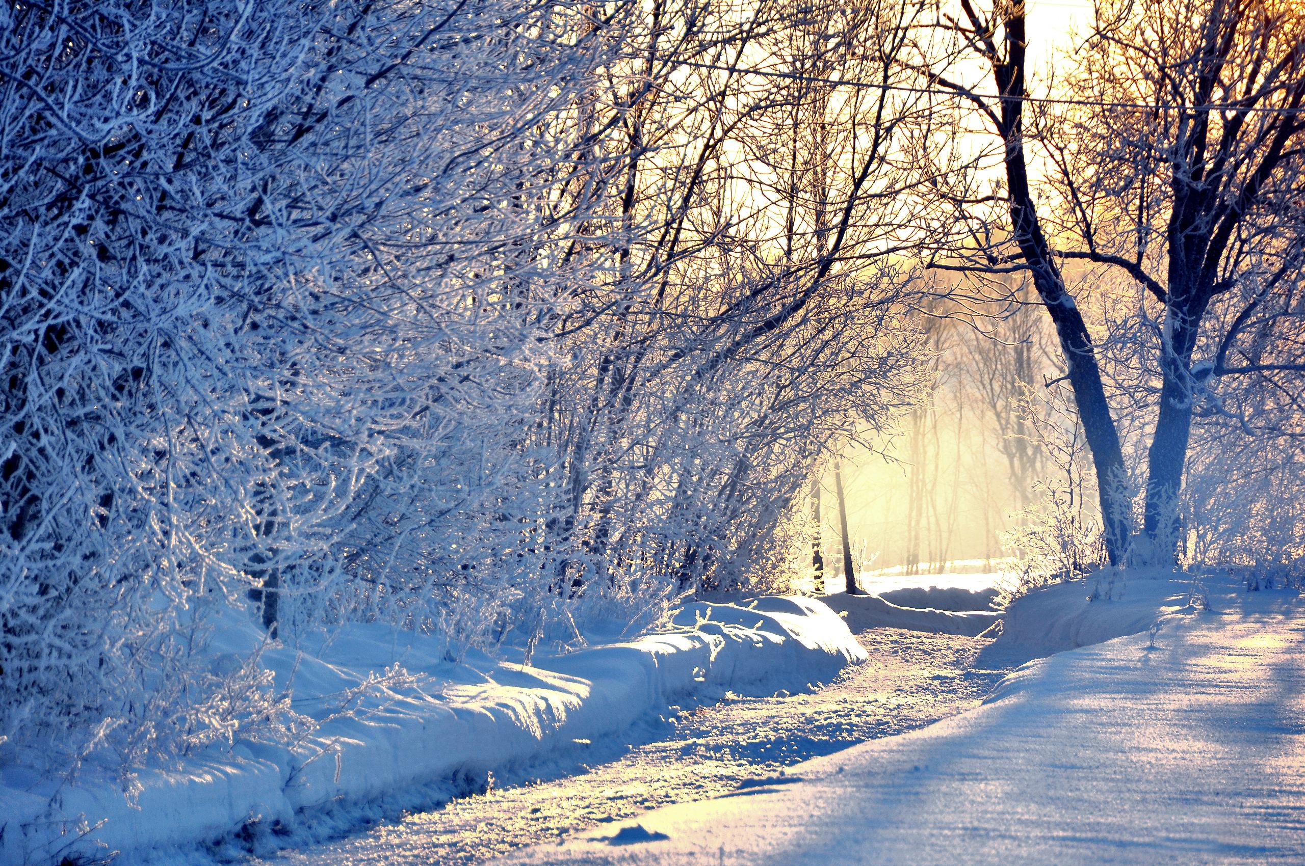 зимний солнечный лес  № 310455  скачать