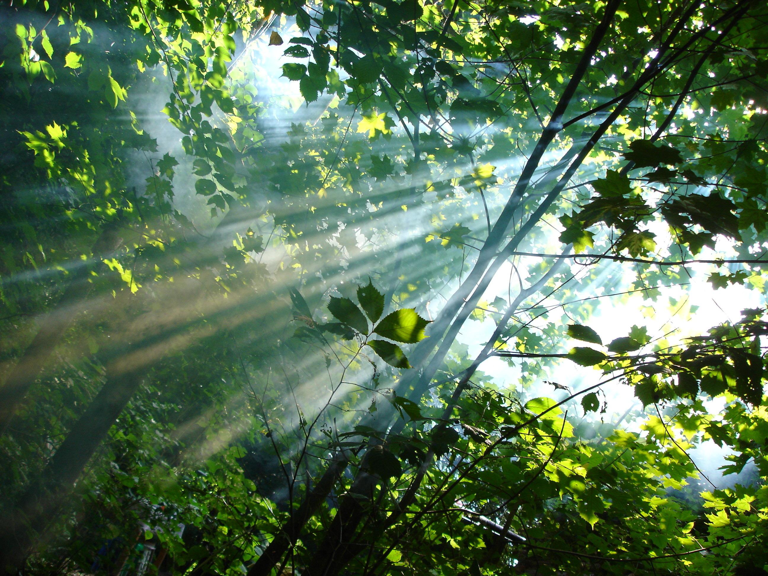Лучи света сквозь листья  № 3096130 загрузить