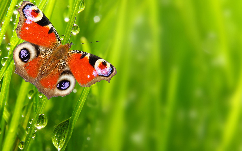 бабочка на зеленой траве  № 1396084 без смс
