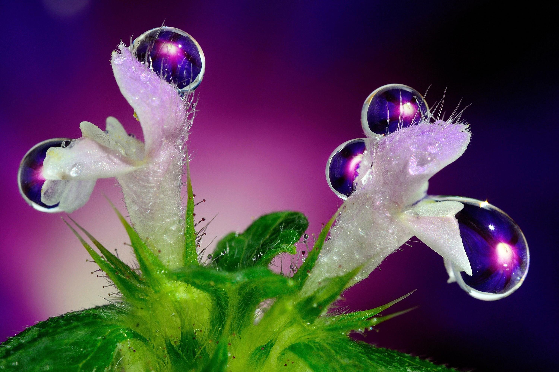 Фото цветы с капельками воды
