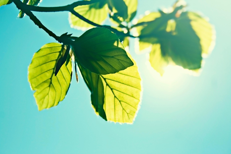 Лучи света сквозь листья  № 3096162  скачать