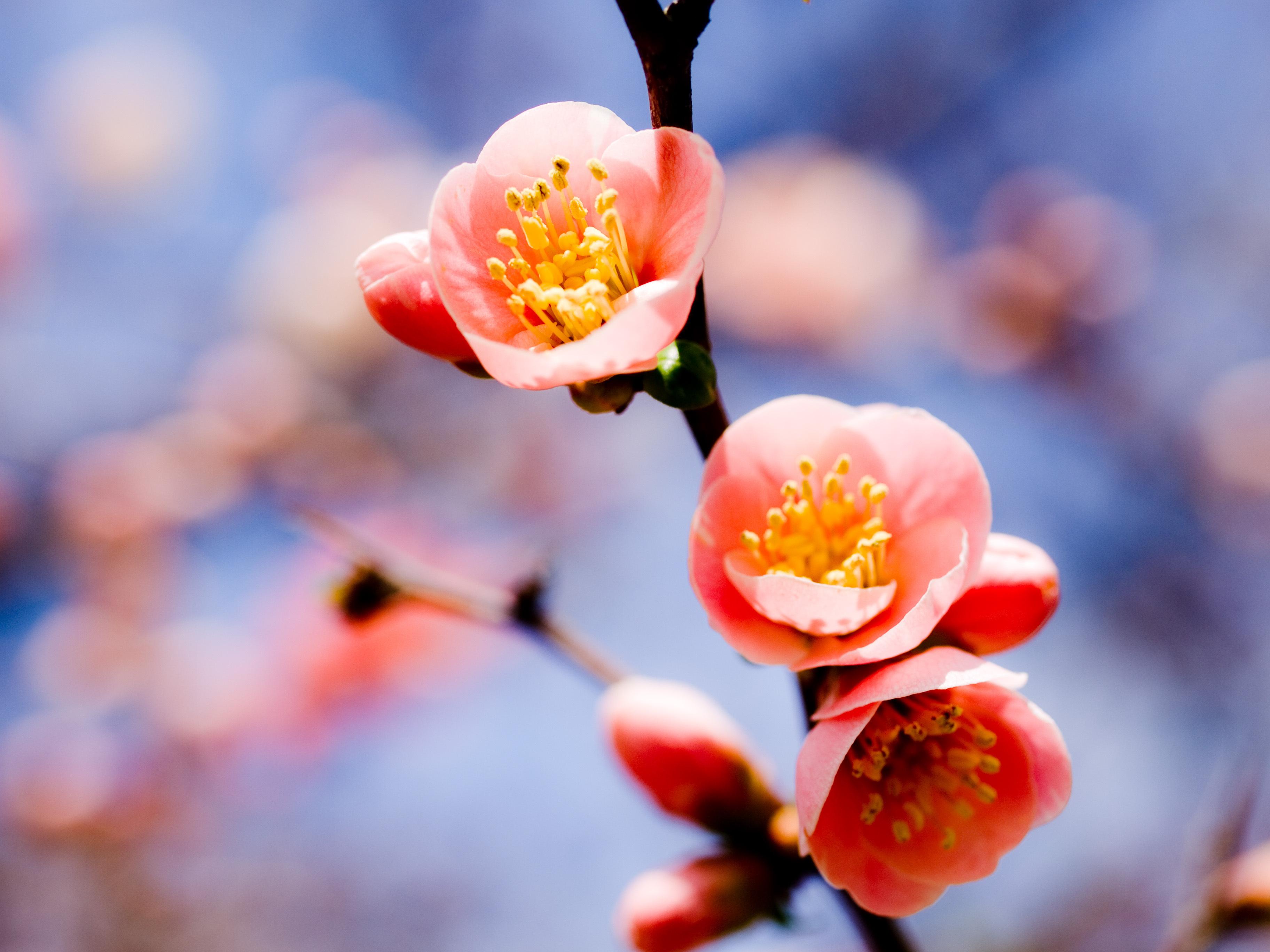 Цветочки весенние картинки передачи том