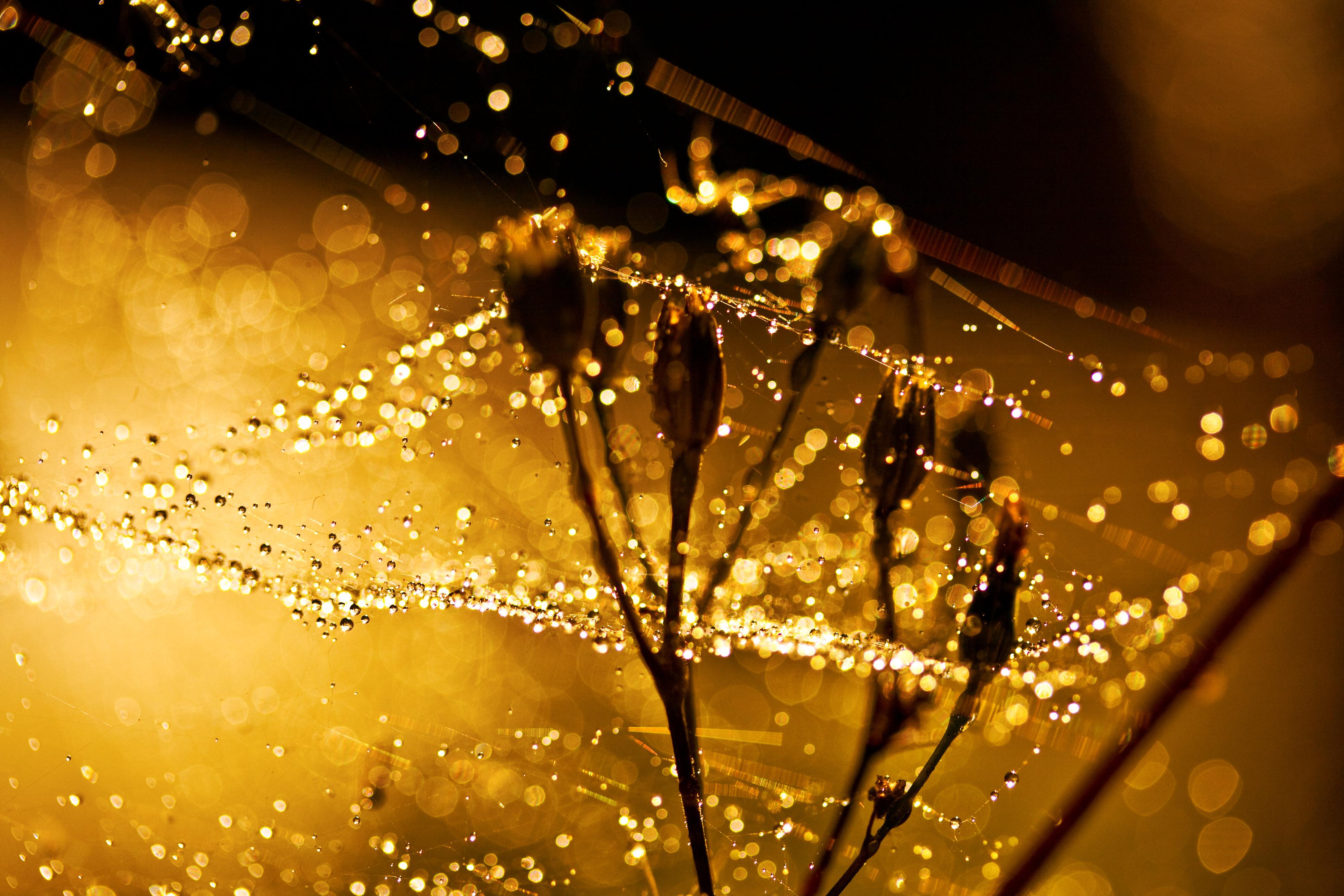 цветы солнце блики  № 1247148 без смс