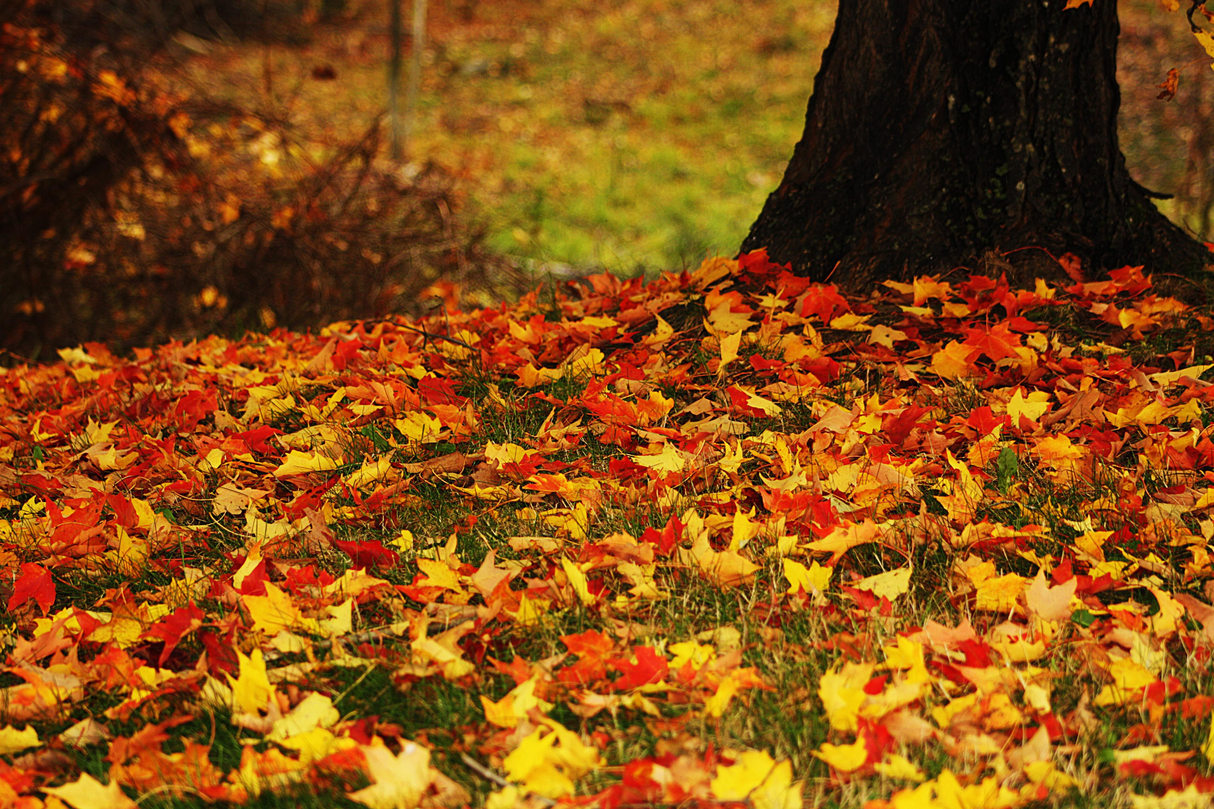 разное природа лампа цветы желтые осень  № 2634620 бесплатно