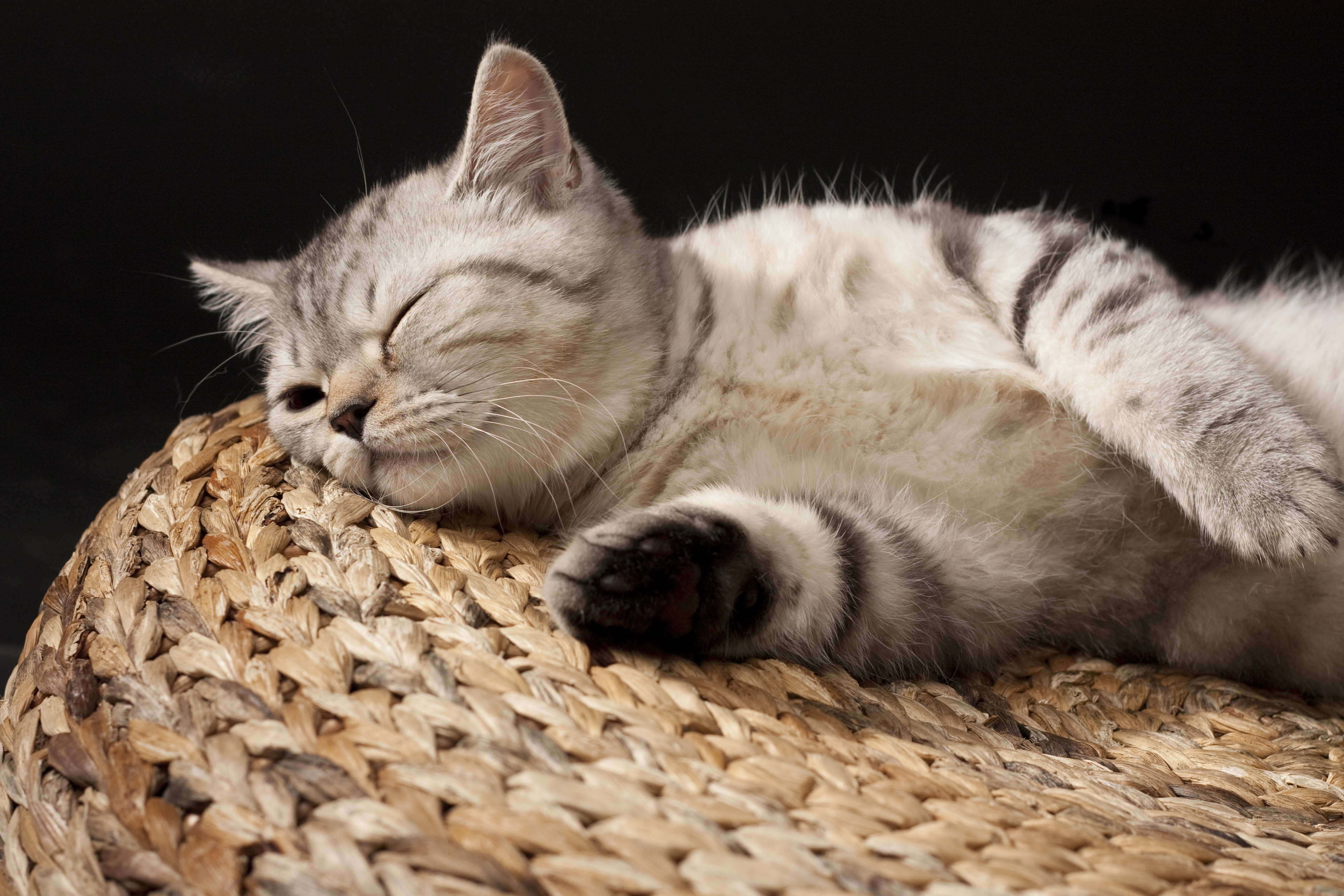Спящий кот  № 1059224  скачать