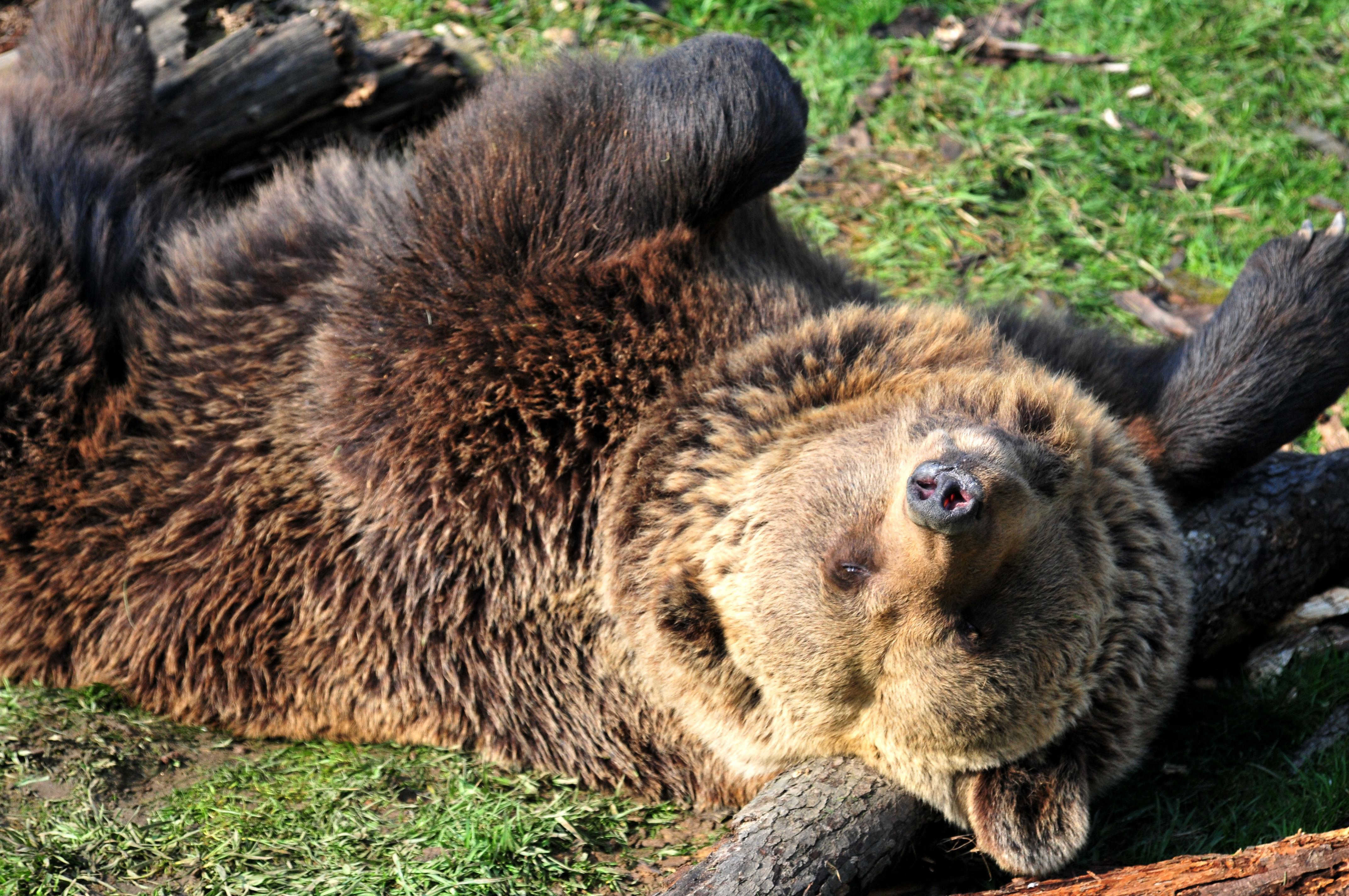 фото довольного медведя образом, подтвердились