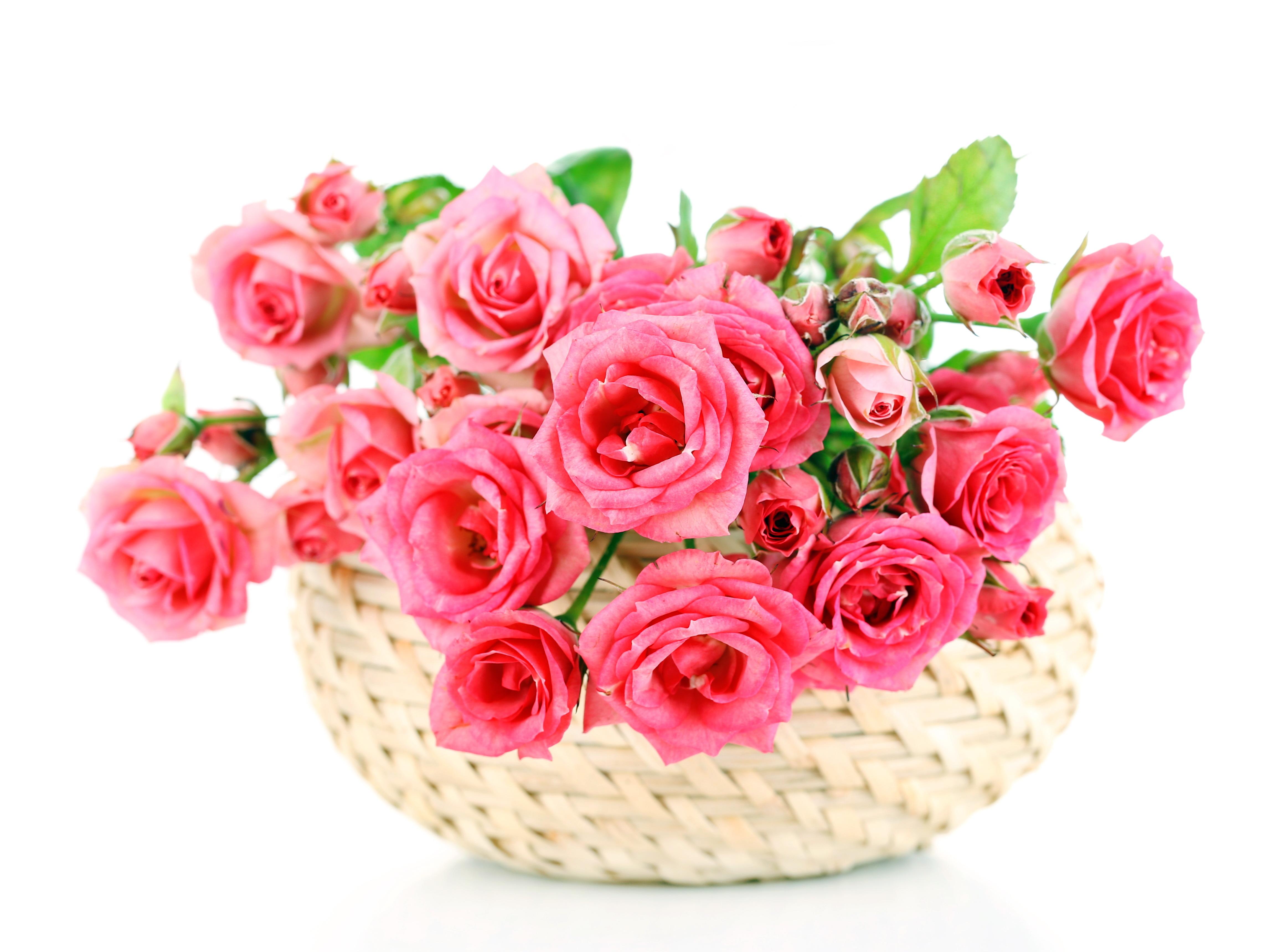 Нежными, открытки корзина розовых роз