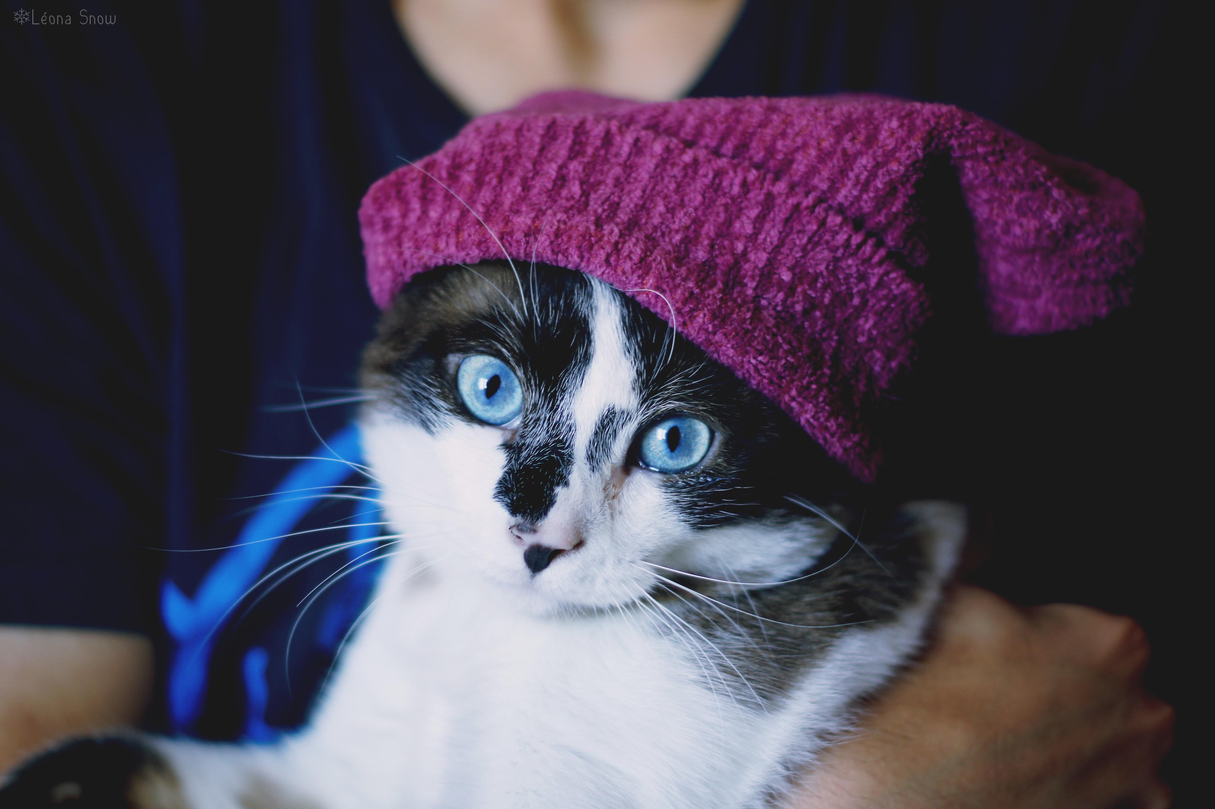 шапки с кошками картинки вашему вниманию идеи
