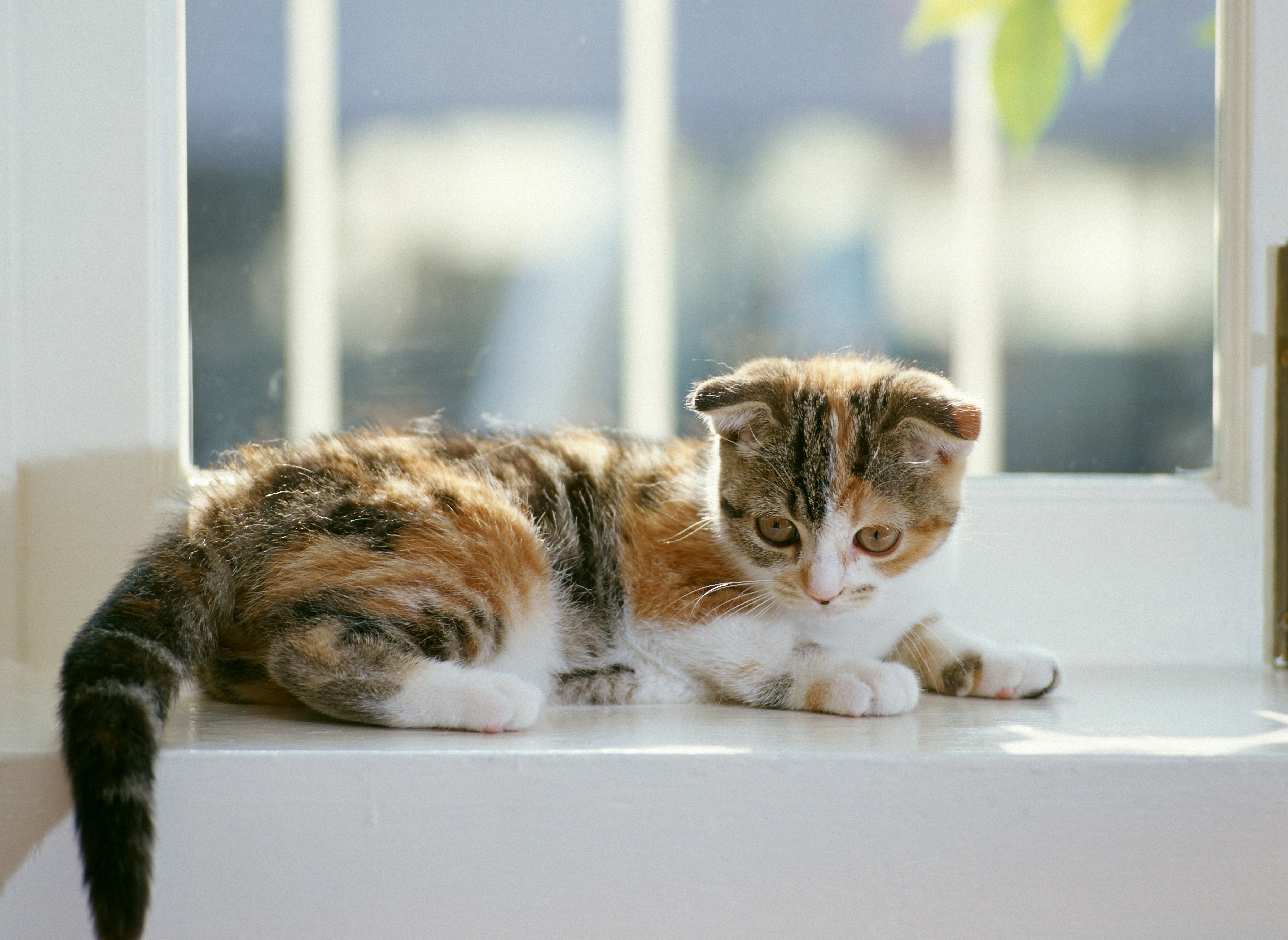 котята на окне kittens on the window  № 3063186 загрузить
