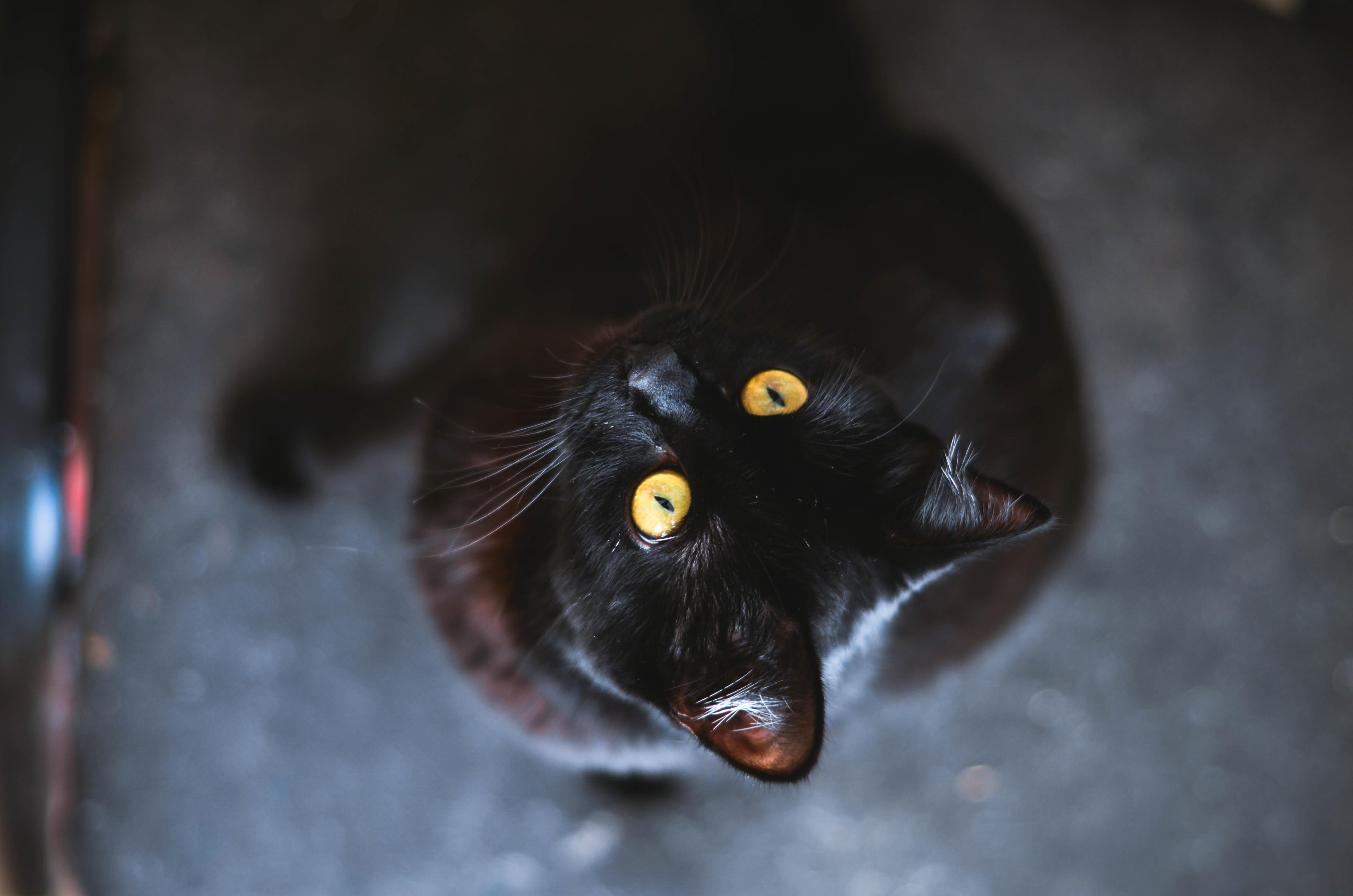 недавней картинки на рабочий стол кошки черные злая стеклянные фасады здания
