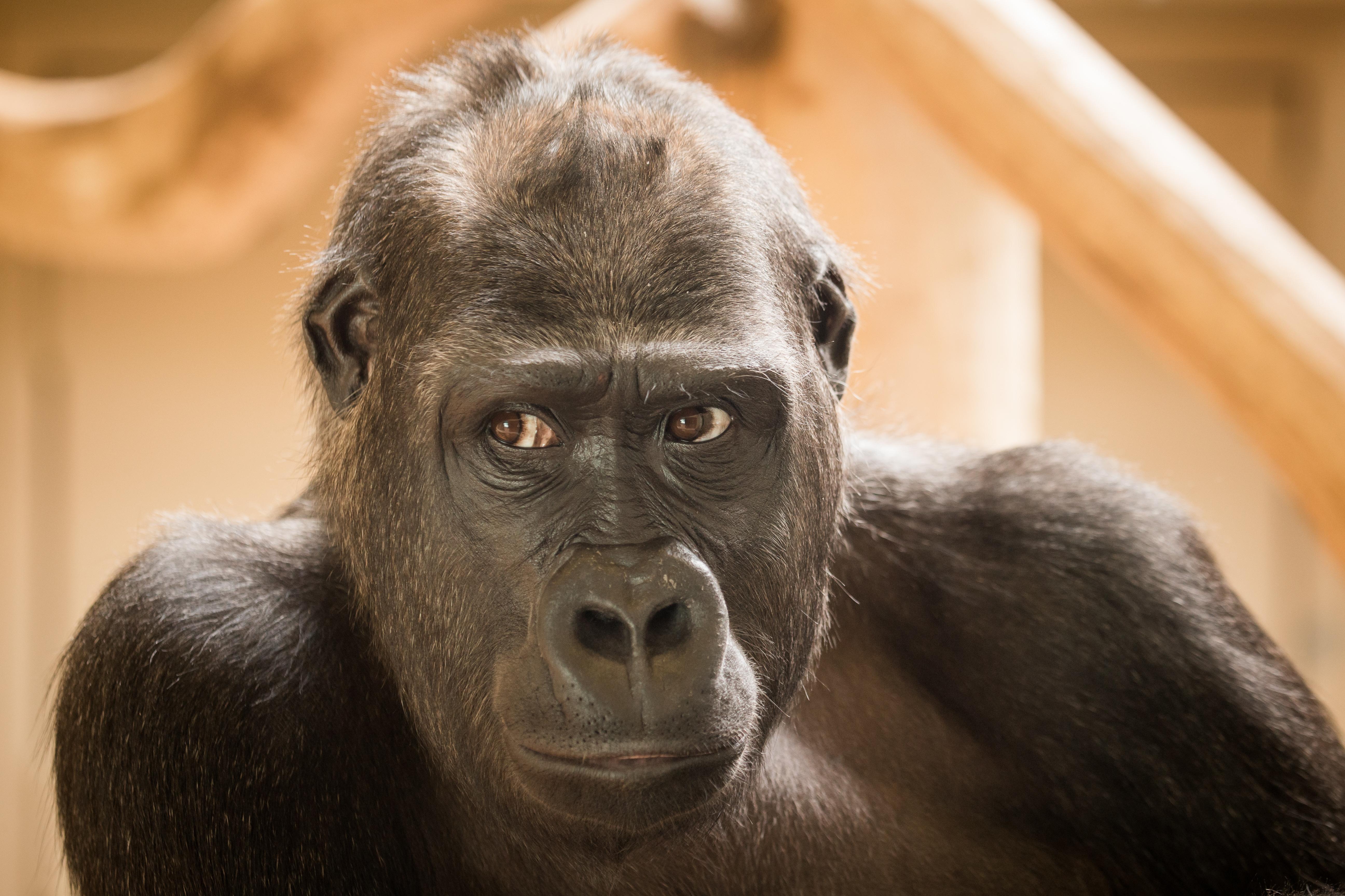 Pretty shaved ape photos, kim possible porno lesbo