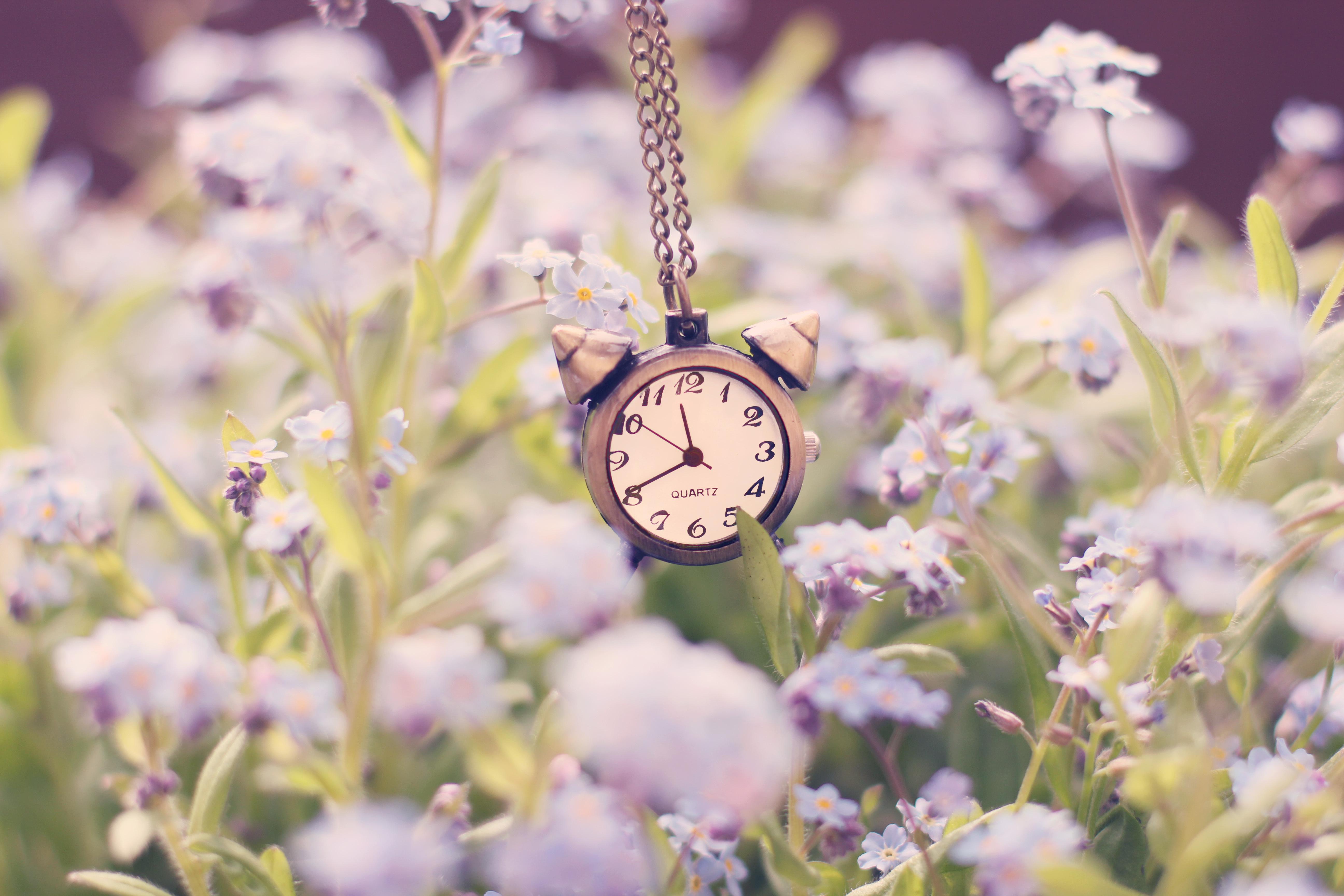 природа цветы часы  № 1520693 загрузить