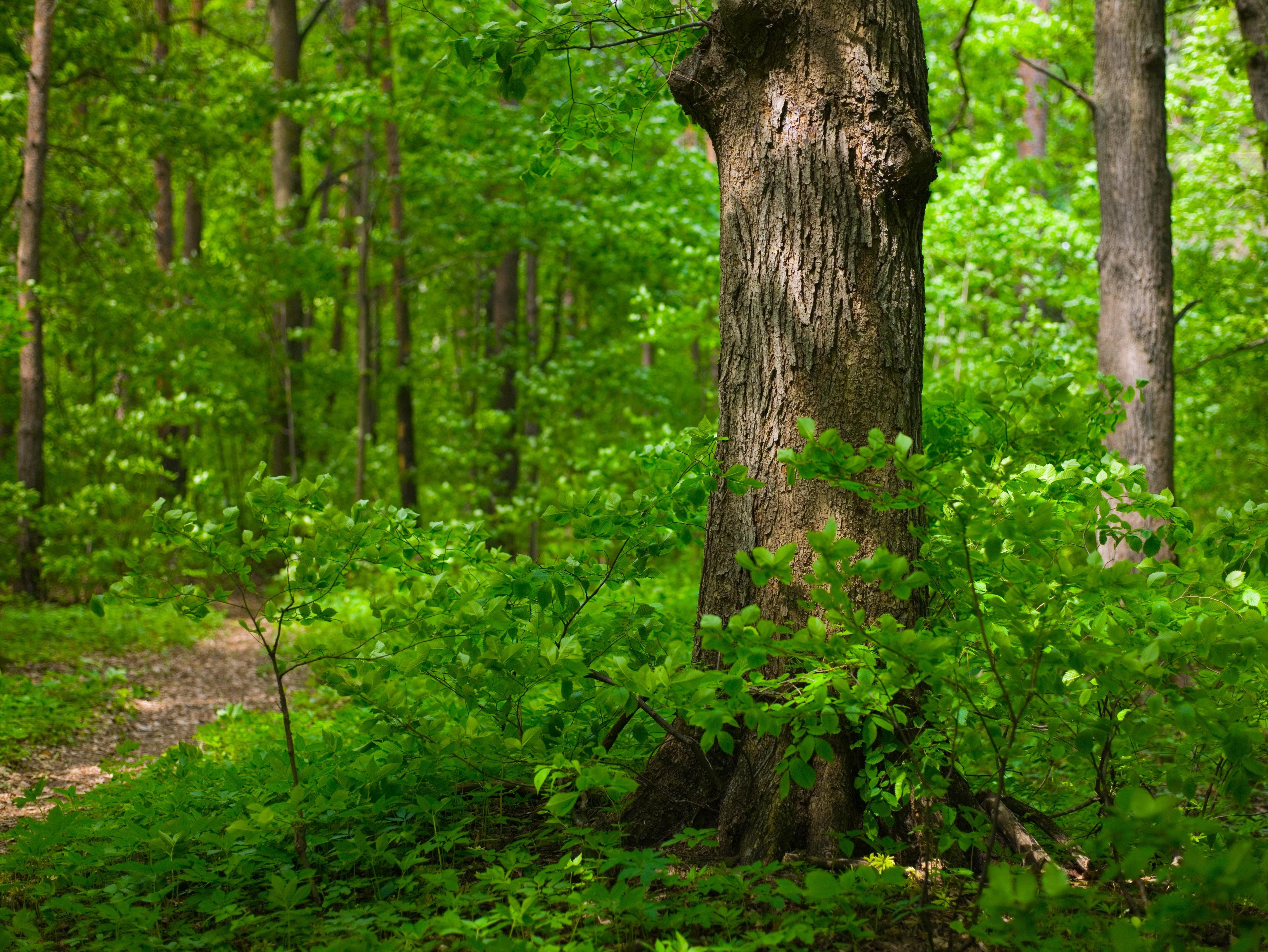 лес зелень ветви  № 2801109 бесплатно