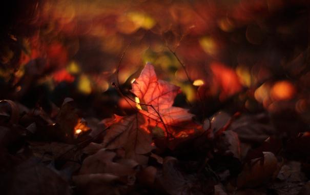 Фото обои макро, листва, блики, кругом
