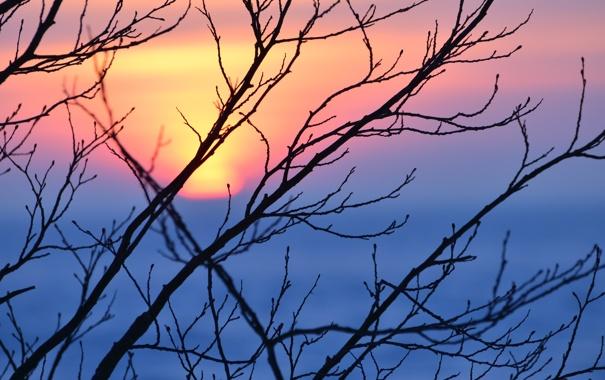 Фото обои солнце, ветви, Закат, вечер