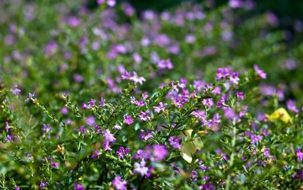 Фото обои зелень, трава, макро, цветы, блики, размытость