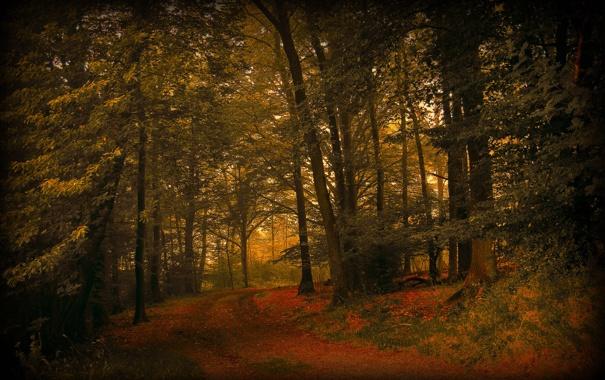 Фото обои дорога, осень, лес, природа, листва